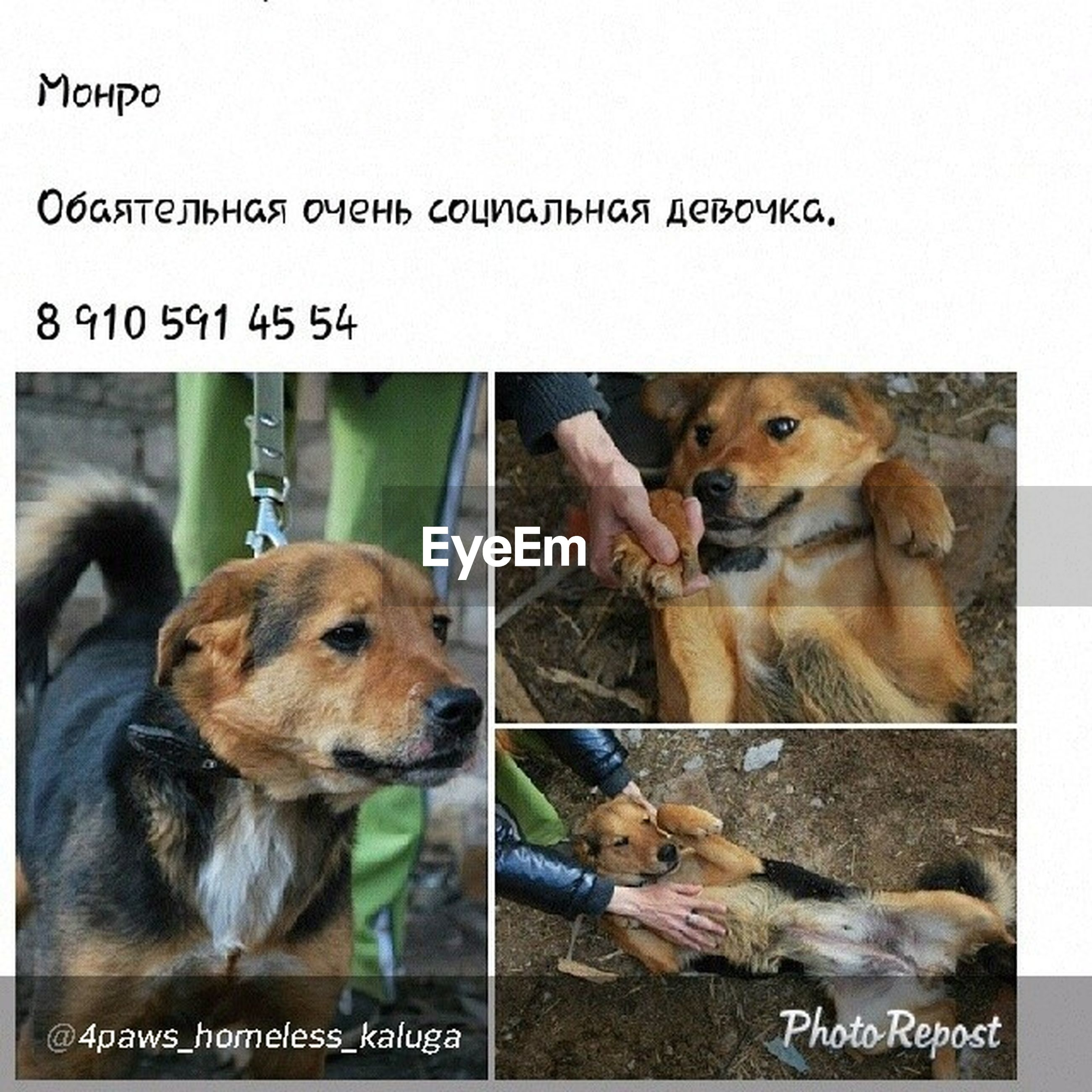 animal themes, mammal, togetherness, domestic animals, pets, two animals, communication, text, bonding, relaxation, love, western script, young animal, friendship, one animal, dog, three animals, sitting, transfer print