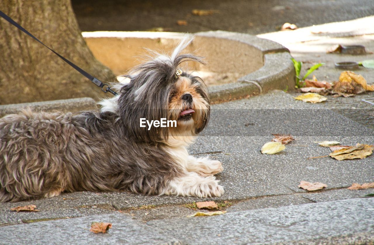 High angle view of dog sitting on messy street