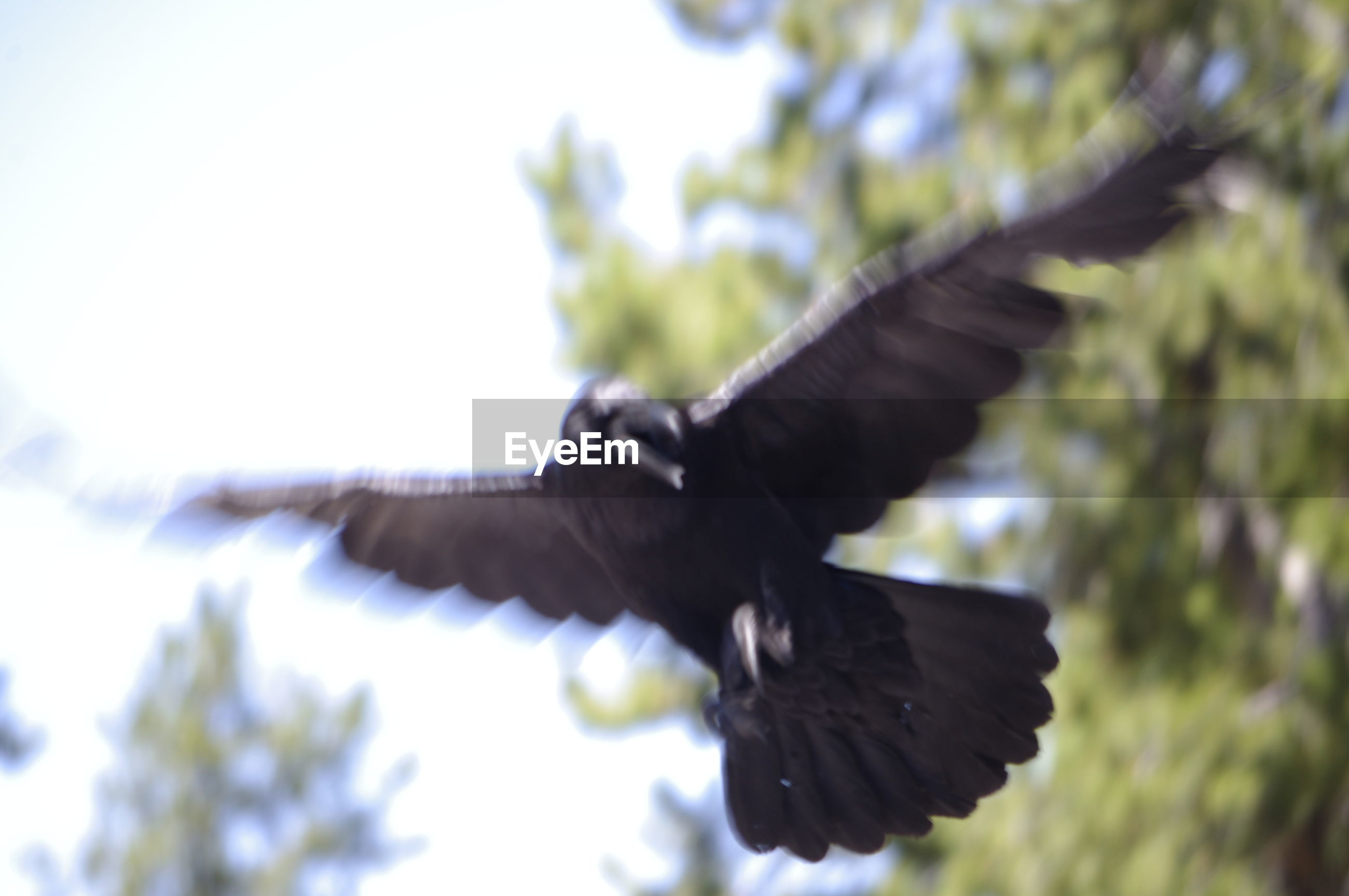 CLOSE-UP OF BIRD FLYING IN SKY