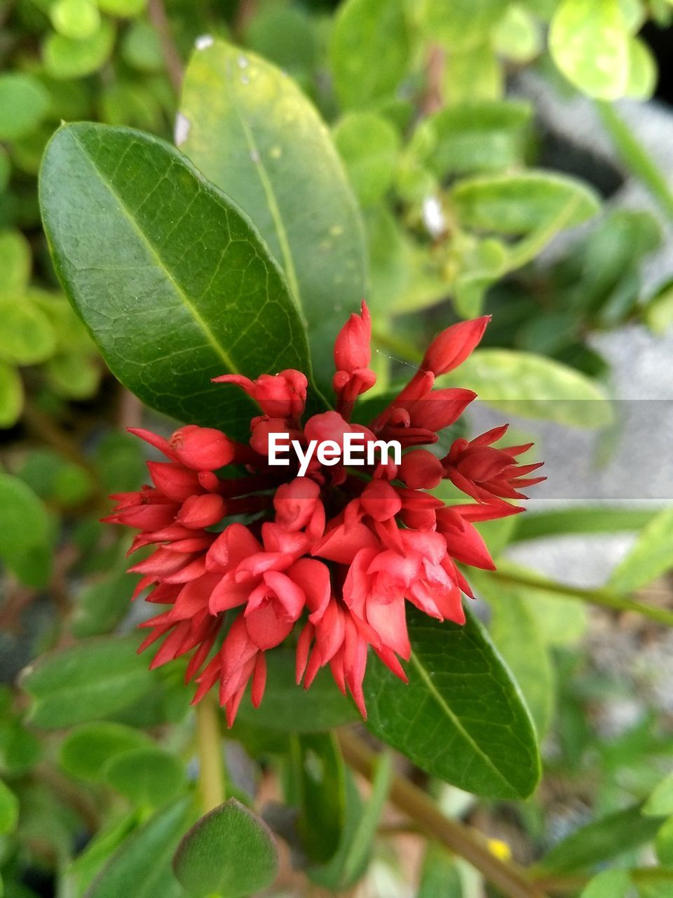 growth, leaf, nature, beauty in nature, green color, freshness, flower, plant, red, fragility, petal, day, close-up, flower head, no people, outdoors