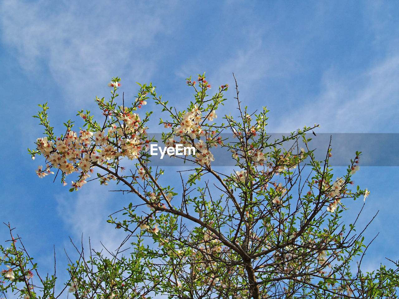 growth, flower, nature, low angle view, beauty in nature, sky, blossom, fragility, plant, tree, branch, freshness, no people, blue, day, outdoors, springtime, cloud - sky, close-up
