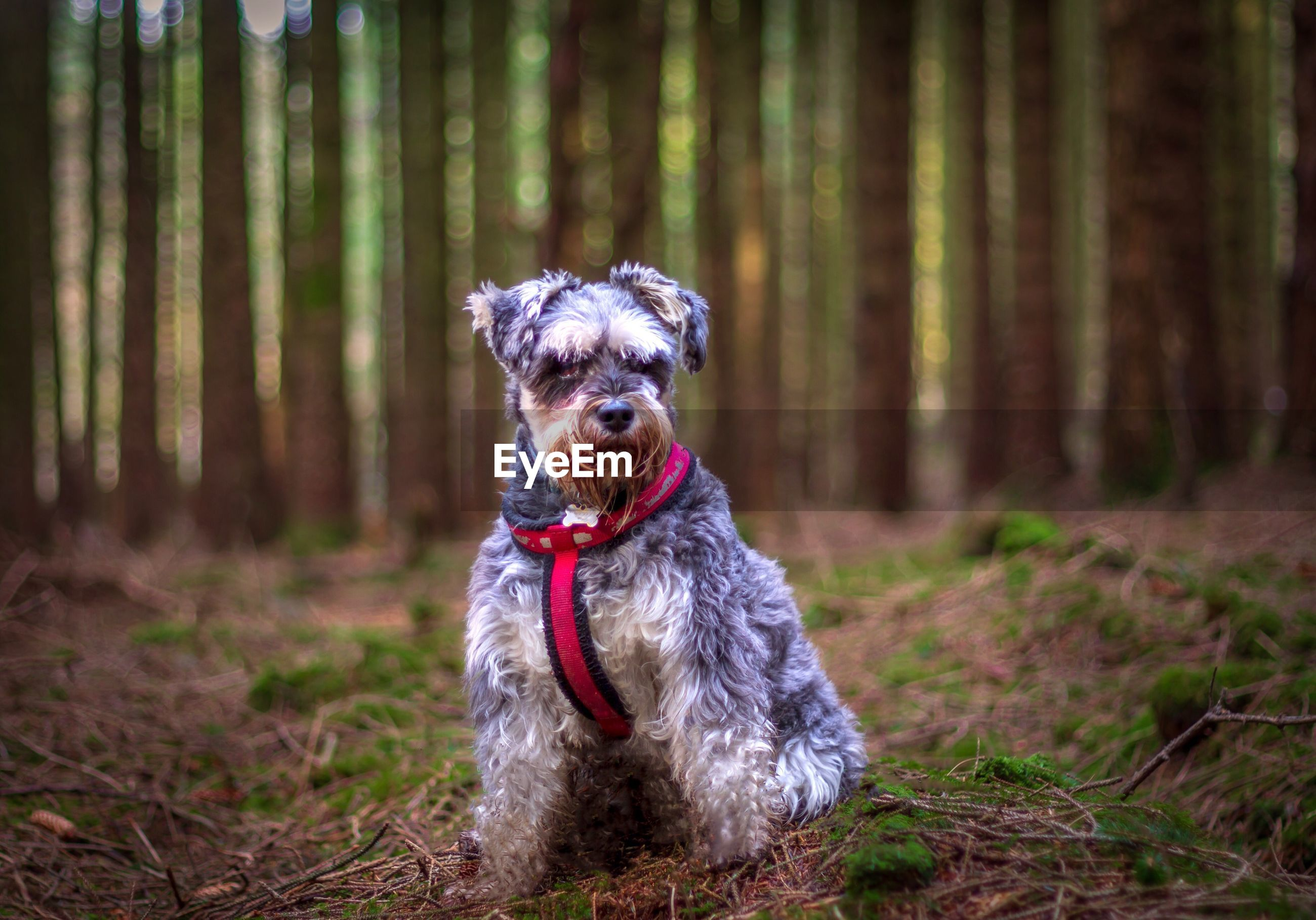 Portrait of a dog sitting on land in forest