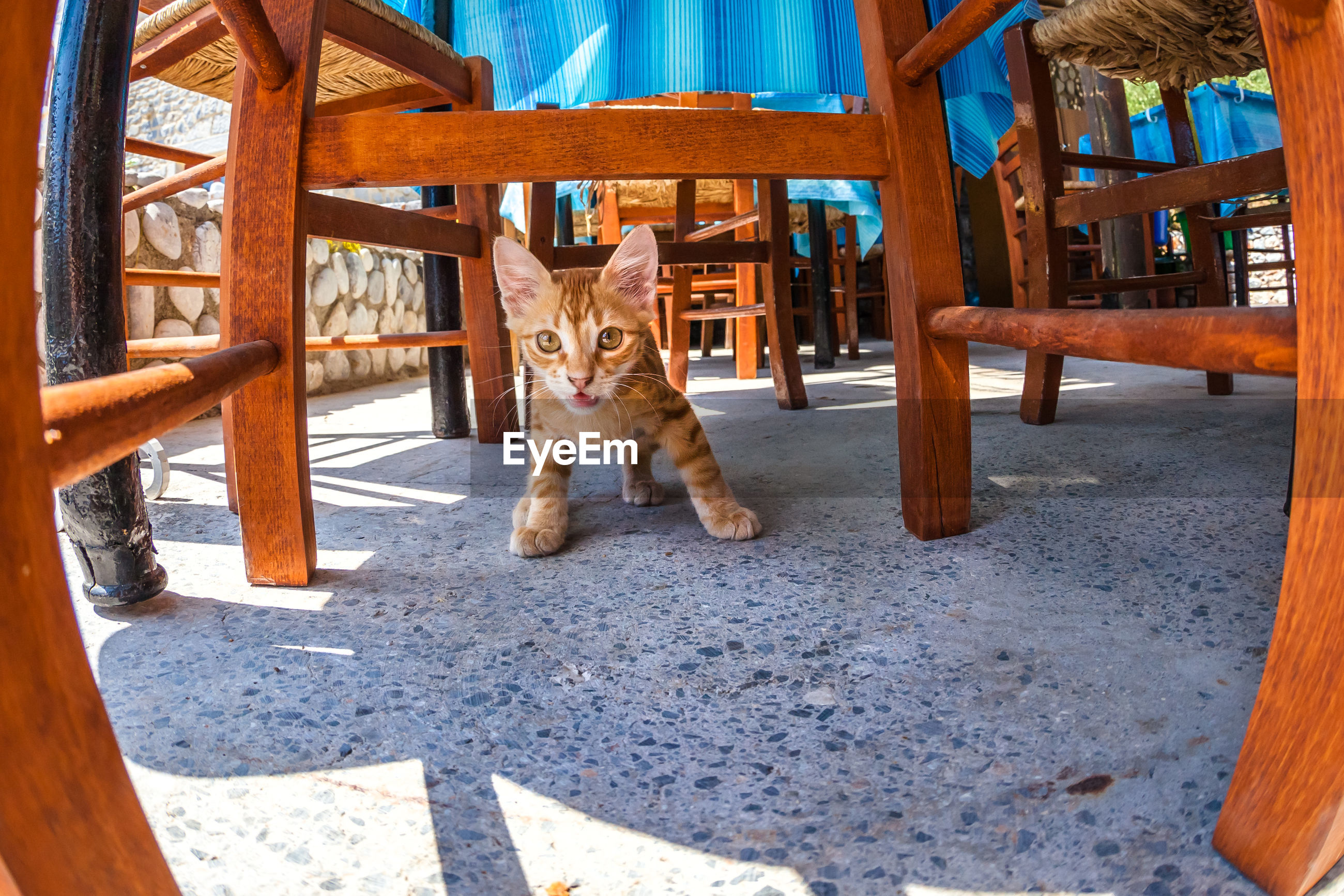 Close-up of kitten under table