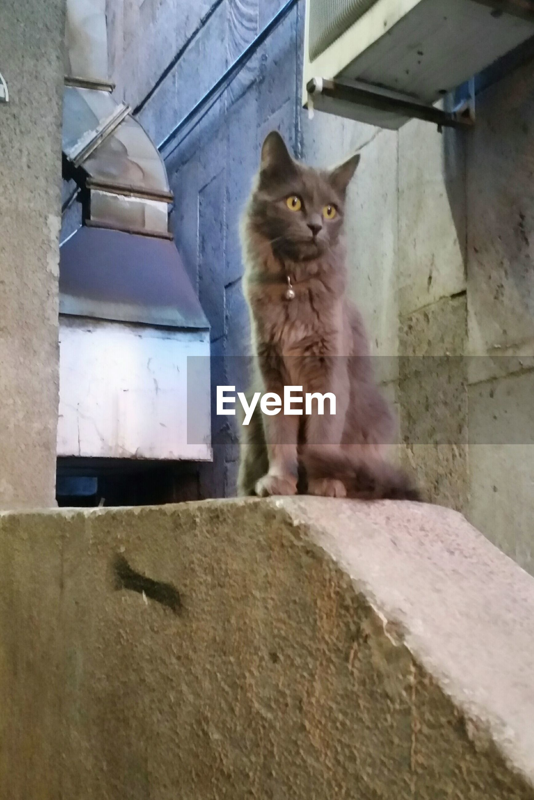 domestic cat, one animal, animal themes, cat, domestic animals, pets, mammal, feline, architecture, built structure, sitting, whisker, full length, building exterior, wall - building feature, indoors, window, looking away, house, no people