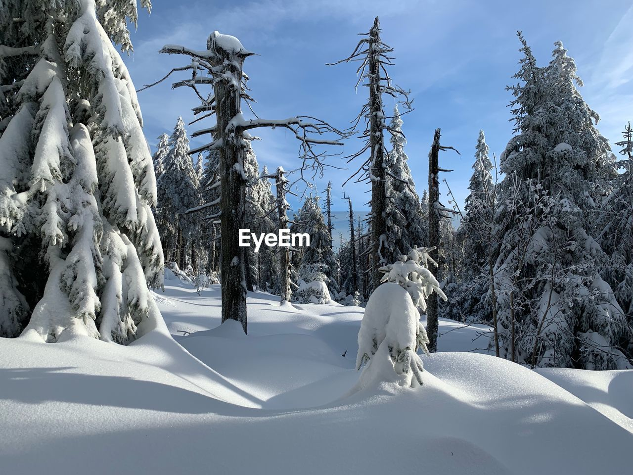 Trees On Snow Covered Field Against Sky