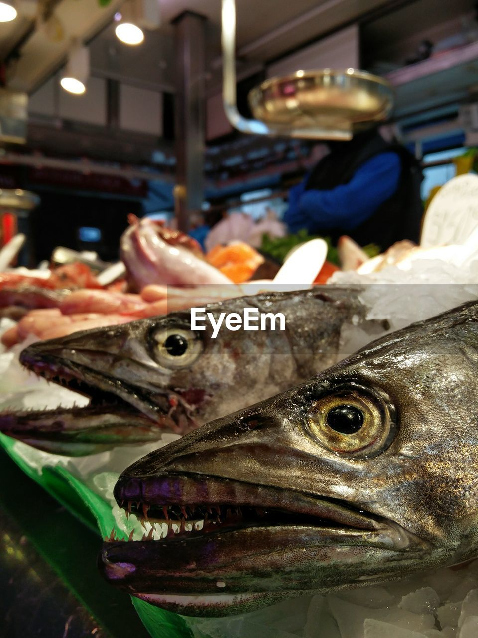 seafood, food, freshness, fish, food and drink, vertebrate, animal, raw food, close-up, healthy eating, for sale, wellbeing, indoors, market, retail, incidental people, business, fish market, focus on foreground, retail display, animal head