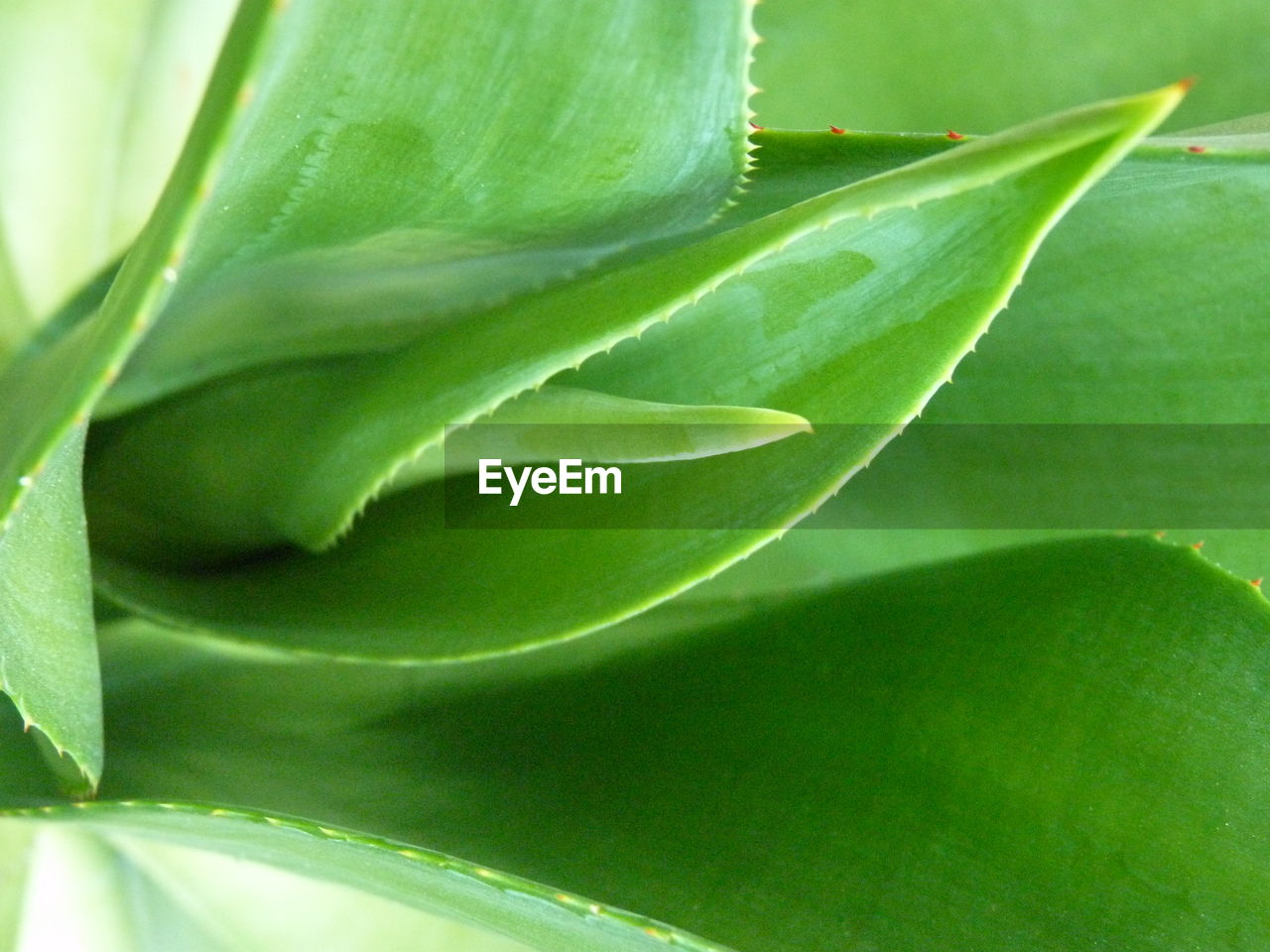 plant part, leaf, green color, plant, close-up, growth, no people, beauty in nature, nature, day, freshness, outdoors, selective focus, backgrounds, full frame, extreme close-up, fragility, focus on foreground, vulnerability, natural pattern, leaves
