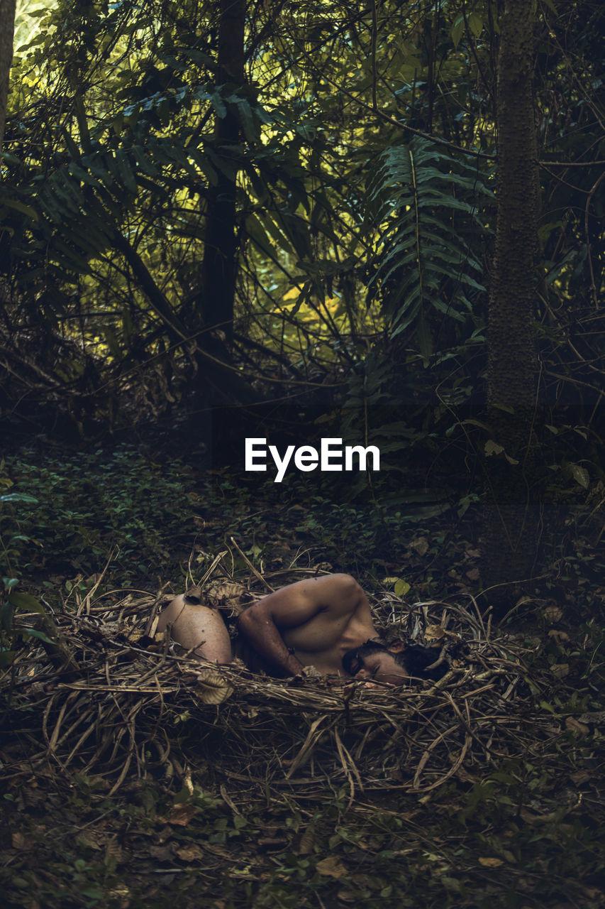 Man Lying In Bird Nest