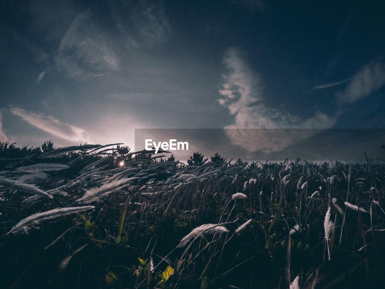 Wheat Field Against Sky