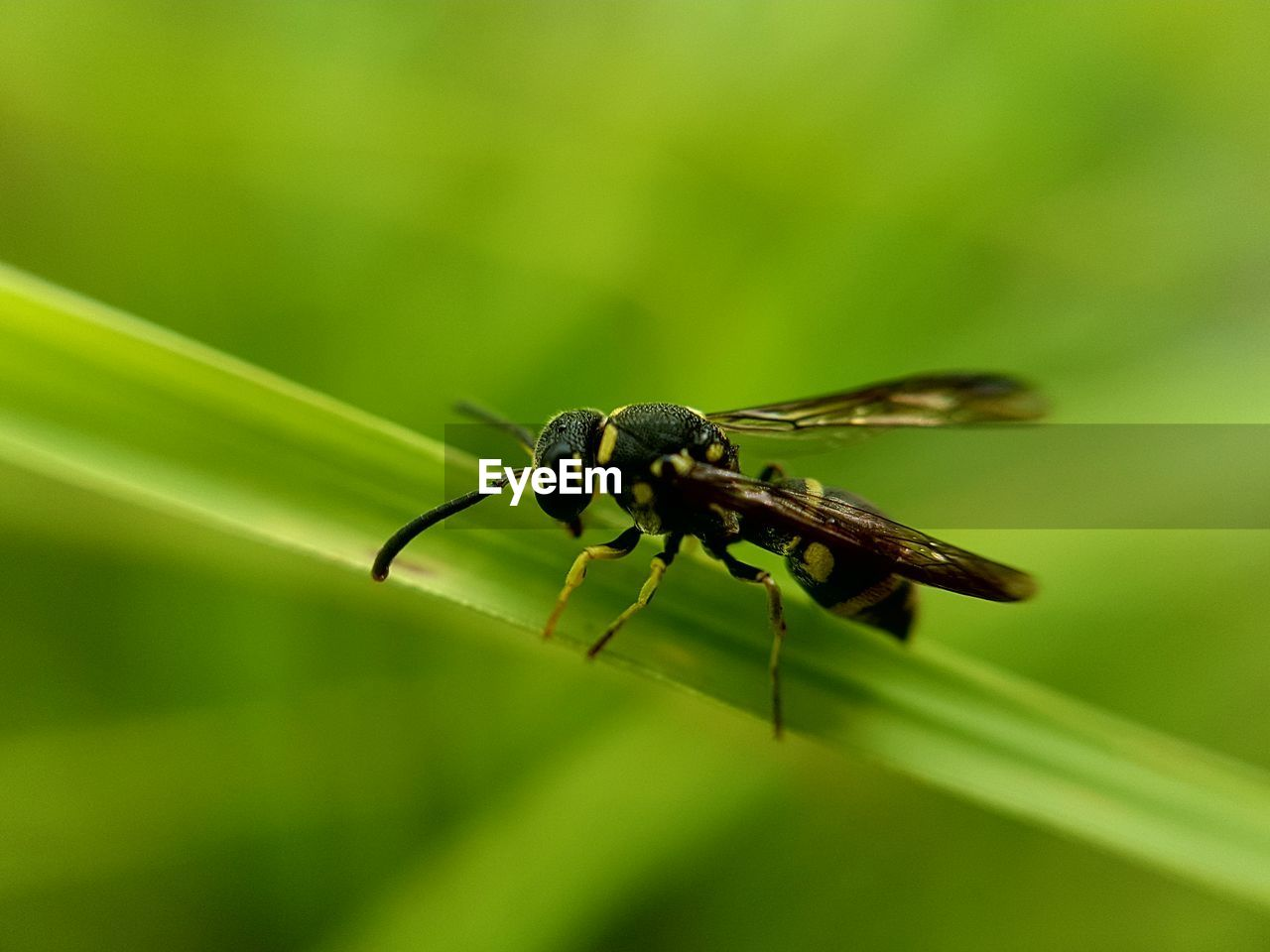 insect, invertebrate, animal themes, animals in the wild, animal wildlife, animal, one animal, green color, close-up, plant, day, no people, focus on foreground, nature, plant part, zoology, leaf, selective focus, animal wing, outdoors, blade of grass