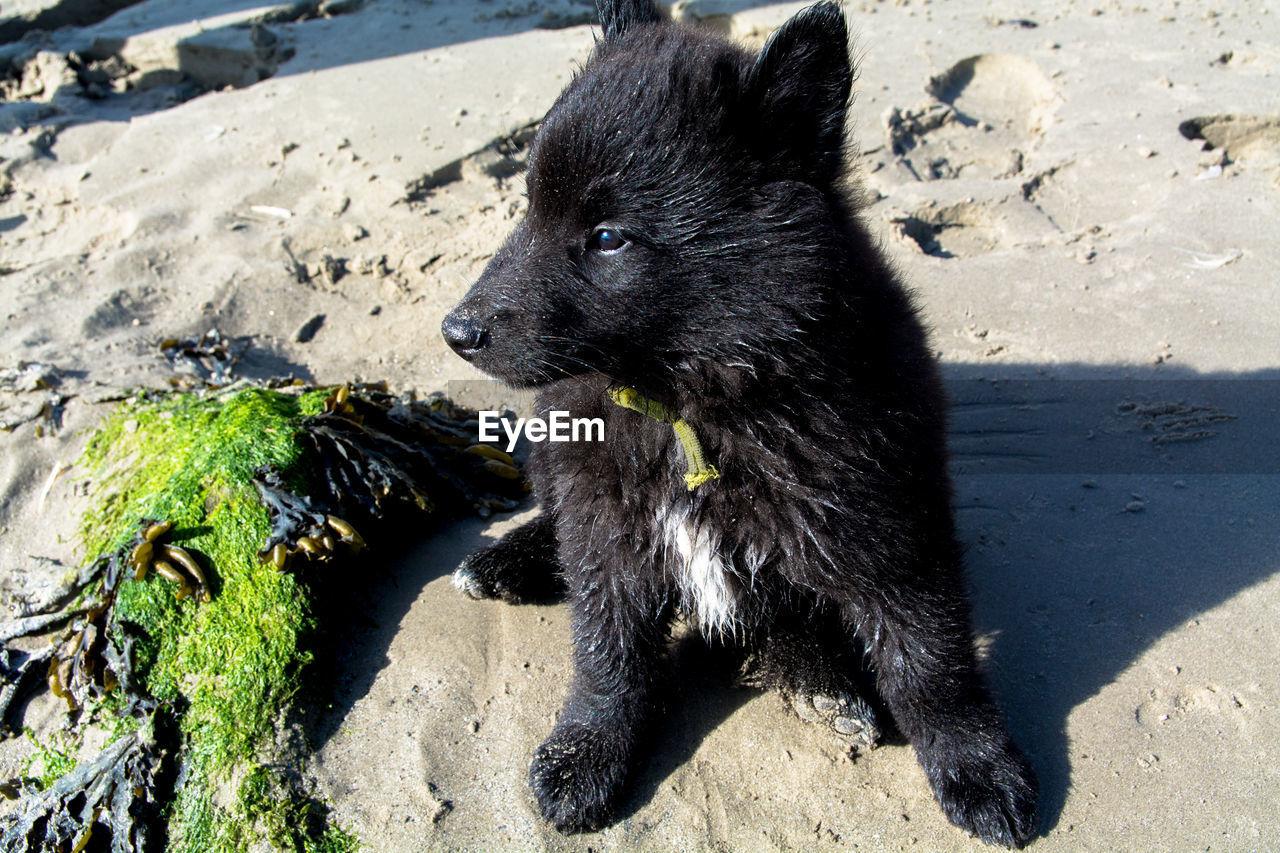 Close-up of puppy on beach