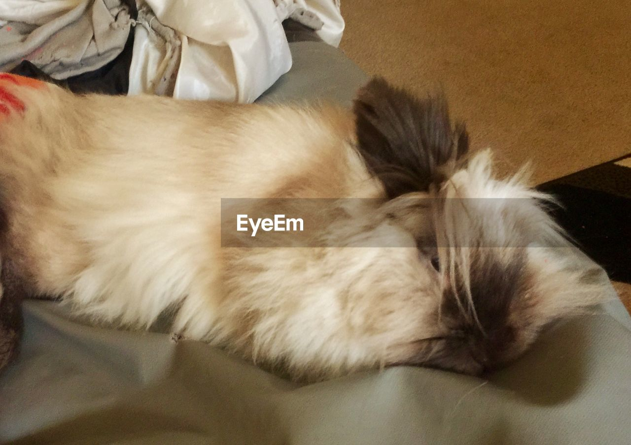 domestic, one animal, pets, domestic animals, mammal, animal, animal themes, sleeping, vertebrate, relaxation, indoors, close-up, domestic cat, resting, cat, feline, eyes closed, lying down, furniture, no people, whisker, animal head, napping
