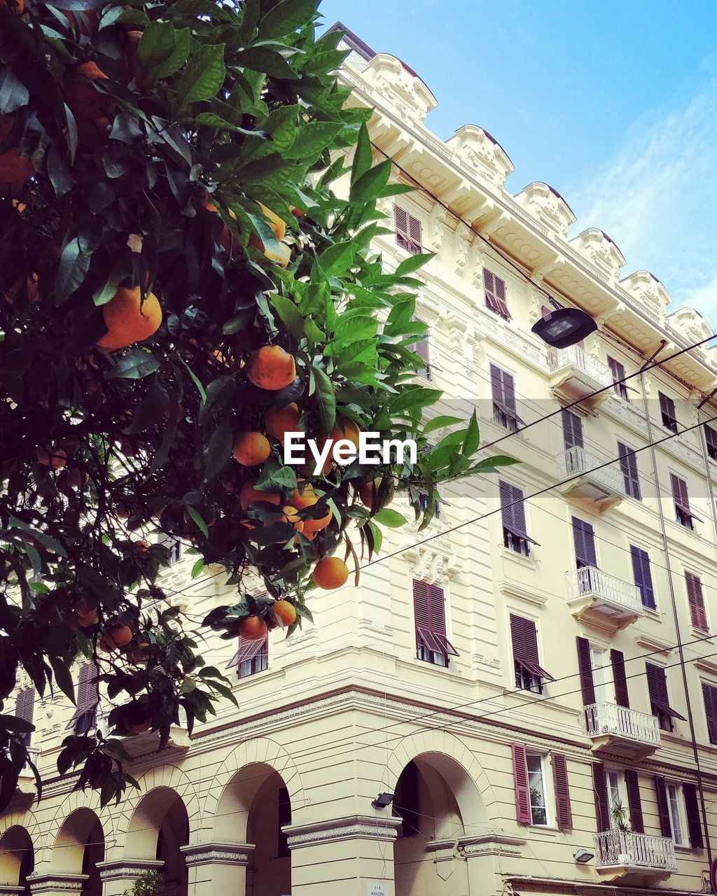 low angle view, architecture, building exterior, built structure, tree, fruit, day, outdoors, orange tree, citrus fruit, leaf, growth, food and drink, no people, hanging, branch, sky, freshness, food
