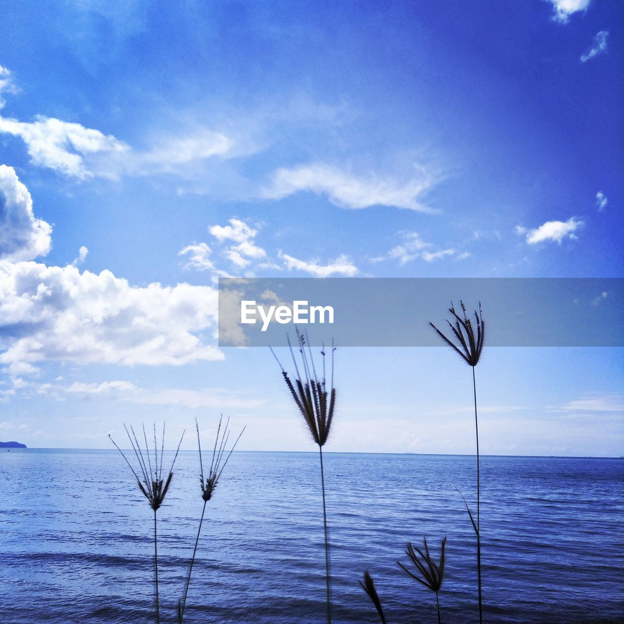 sky, beauty in nature, water, cloud - sky, tranquil scene, tranquility, scenics - nature, sea, nature, no people, day, blue, horizon, plant, growth, horizon over water, outdoors, land, idyllic
