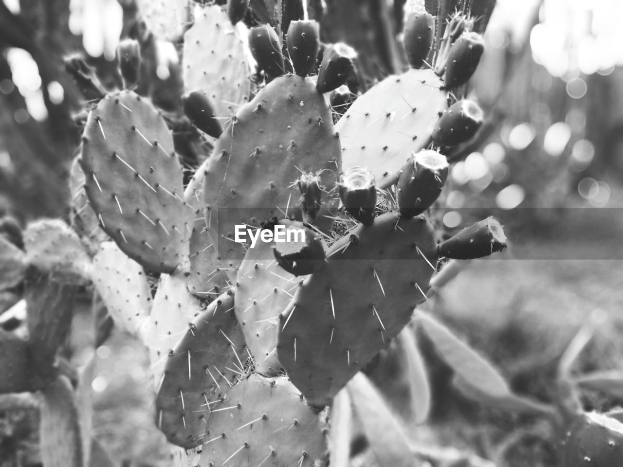 growth, nature, focus on foreground, outdoors, day, close-up, fragility, beauty in nature, no people, plant, freshness, flower, prickly pear cactus, flower head