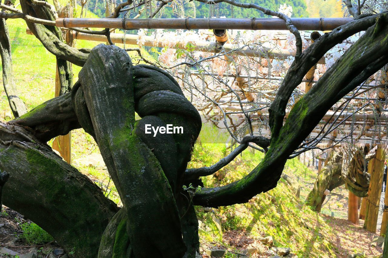 Close-up of twisted tree