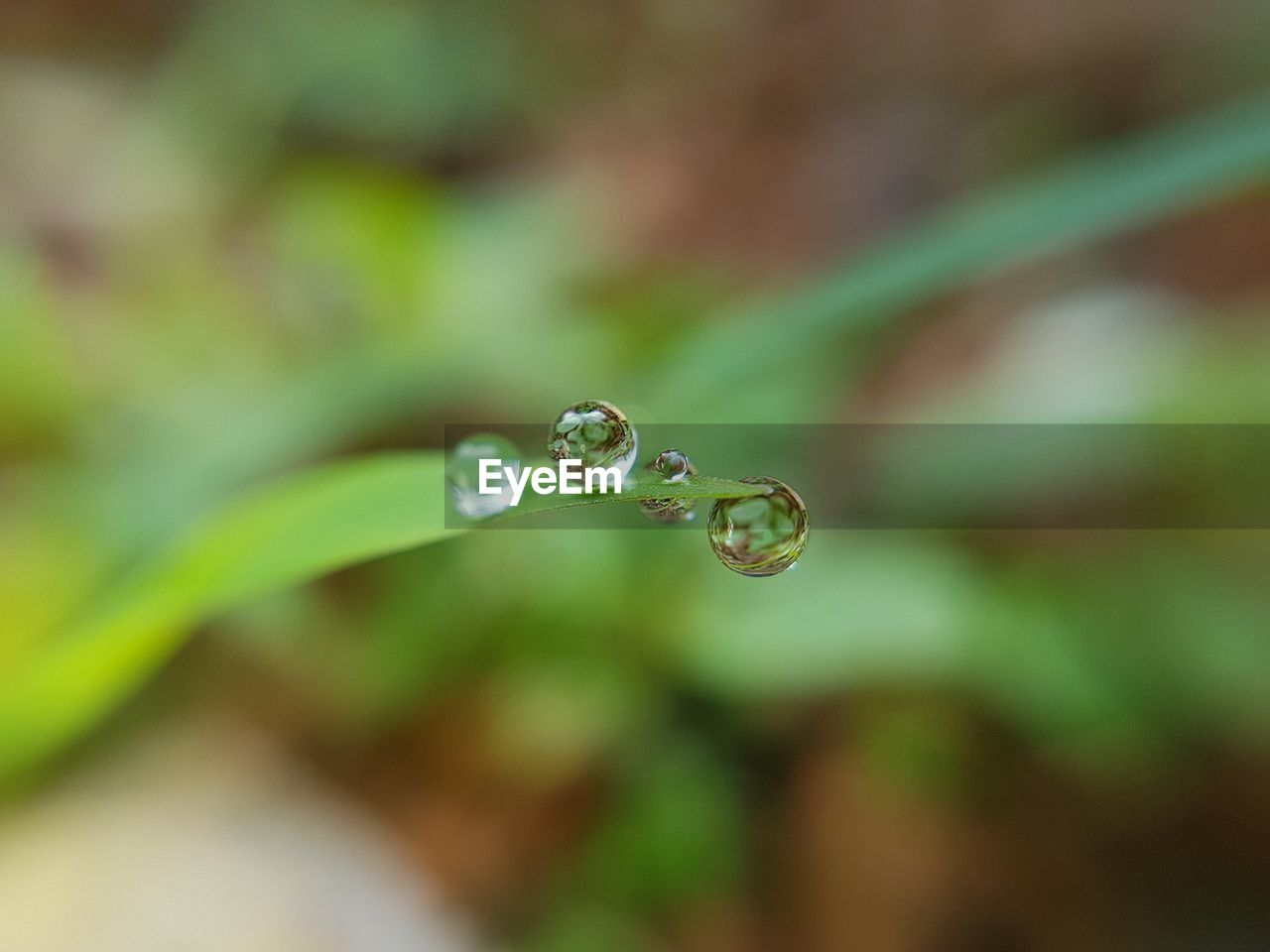 drop, water, nature, growth, focus on foreground, plant, beauty in nature, freshness, wet, purity, fragility, day, leaf, no people, close-up, green color, outdoors, dripping, grass