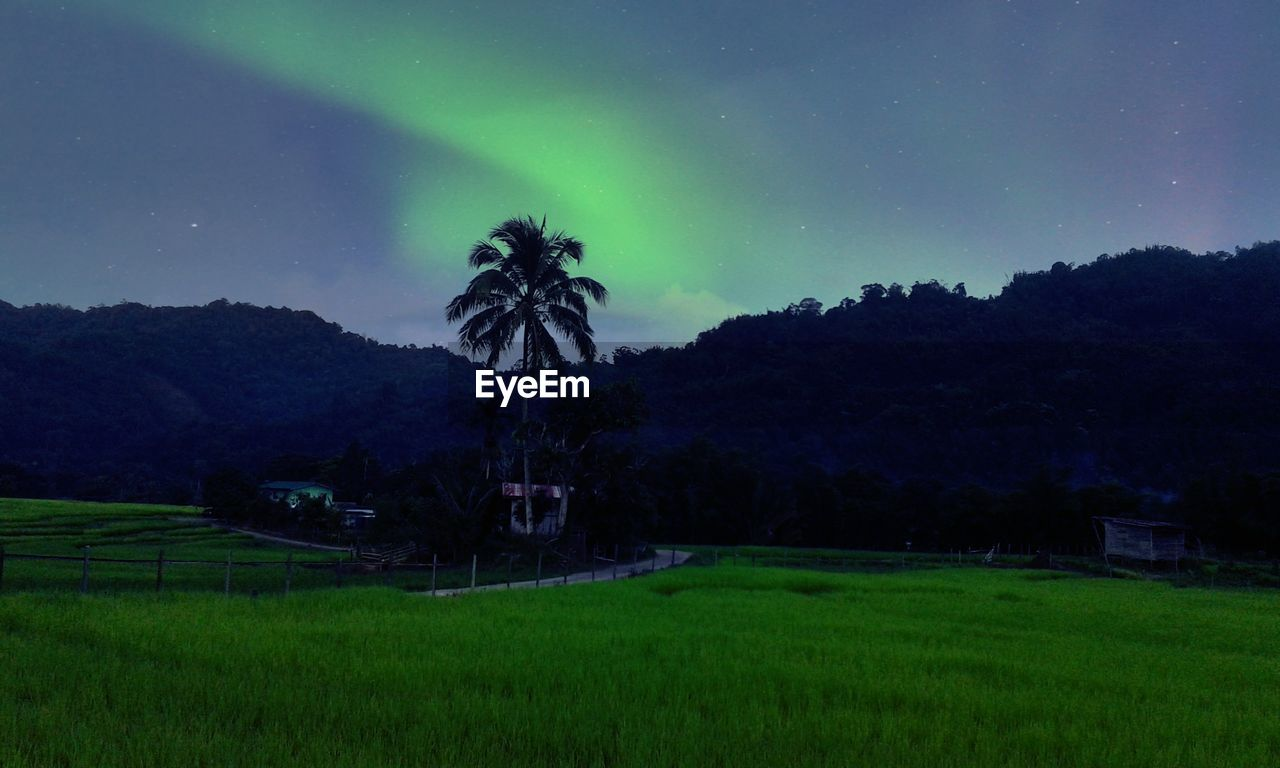 night, field, green color, beauty in nature, tree, nature, landscape, tranquility, scenics, tranquil scene, growth, sky, palm tree, star - space, grass, no people, outdoors, illuminated, rural scene, mountain, astronomy, galaxy