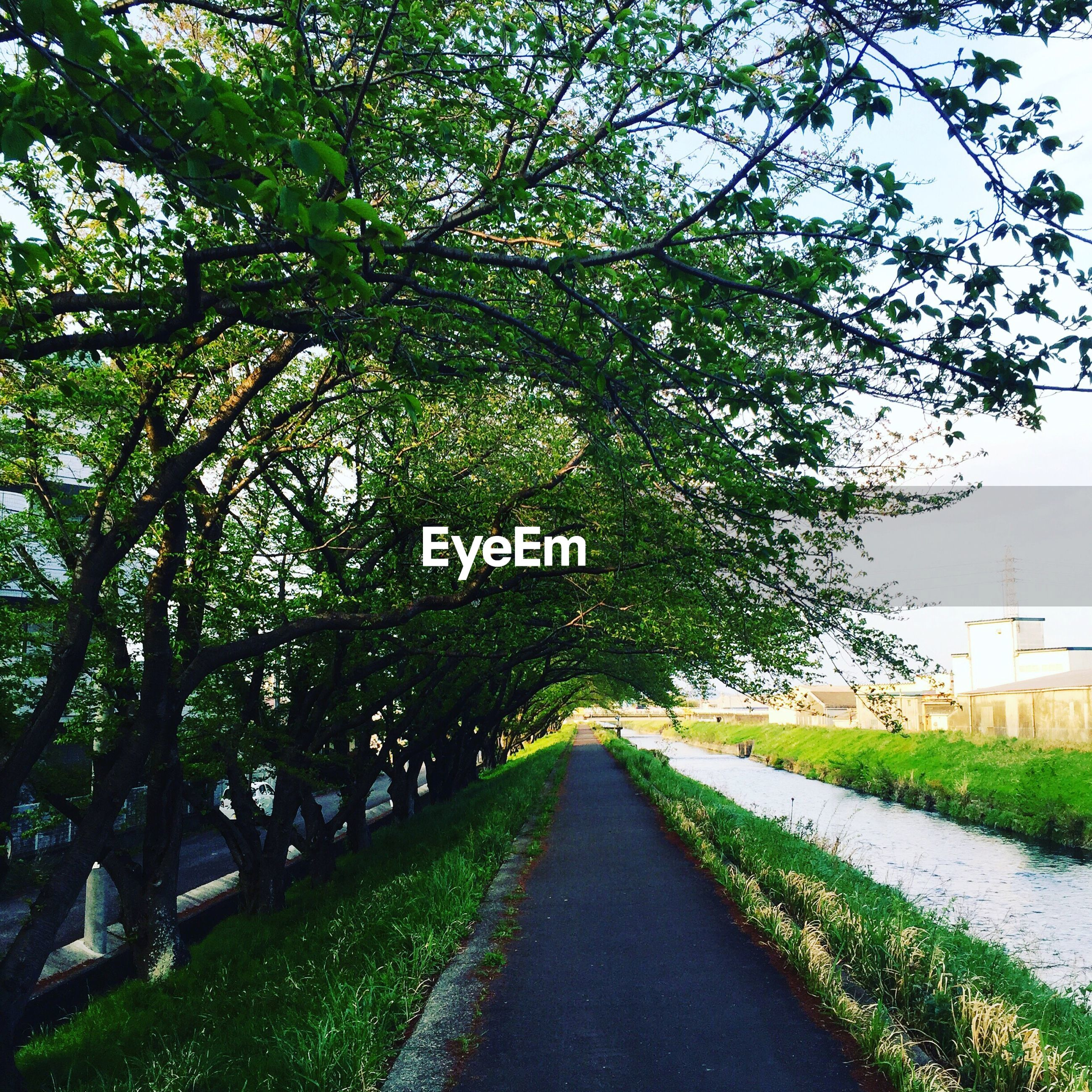 tree, the way forward, road, growth, tranquil scene, branch, tranquility, green color, day, diminishing perspective, nature, narrow, green, footpath, solitude, long, outdoors, surface level, scenics, remote