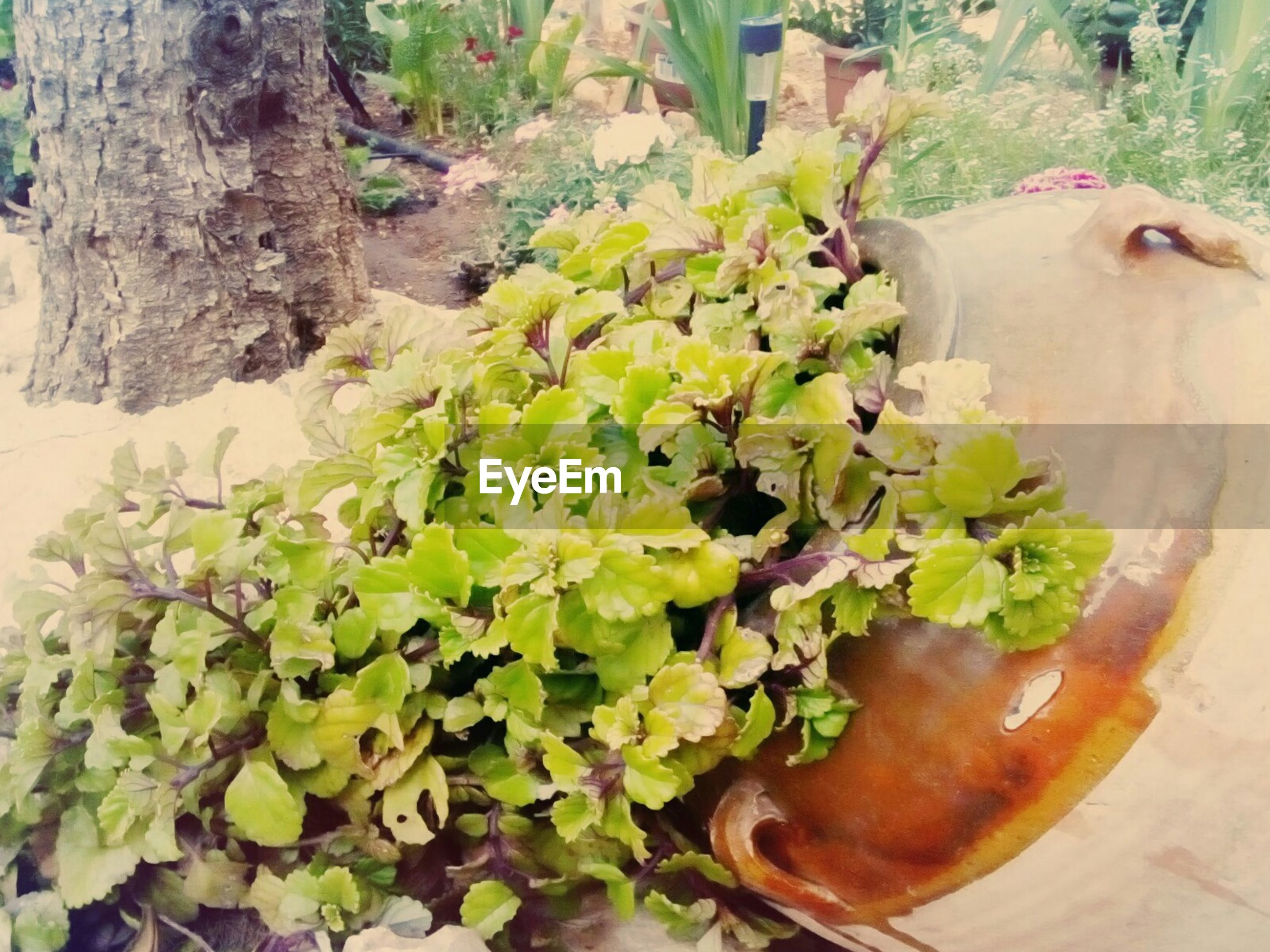 growth, leaf, plant, green color, animal themes, nature, domestic animals, freshness, mammal, close-up, food and drink, one animal, wood - material, brown, day, potted plant, high angle view, no people, front or back yard, tree