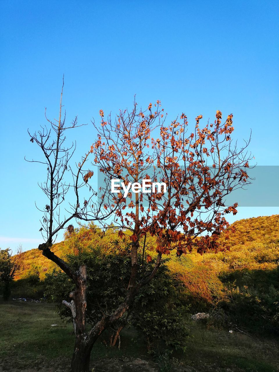 plant, sky, beauty in nature, tree, growth, tranquility, nature, autumn, land, field, tranquil scene, scenics - nature, no people, day, clear sky, landscape, environment, outdoors, change, branch, fall