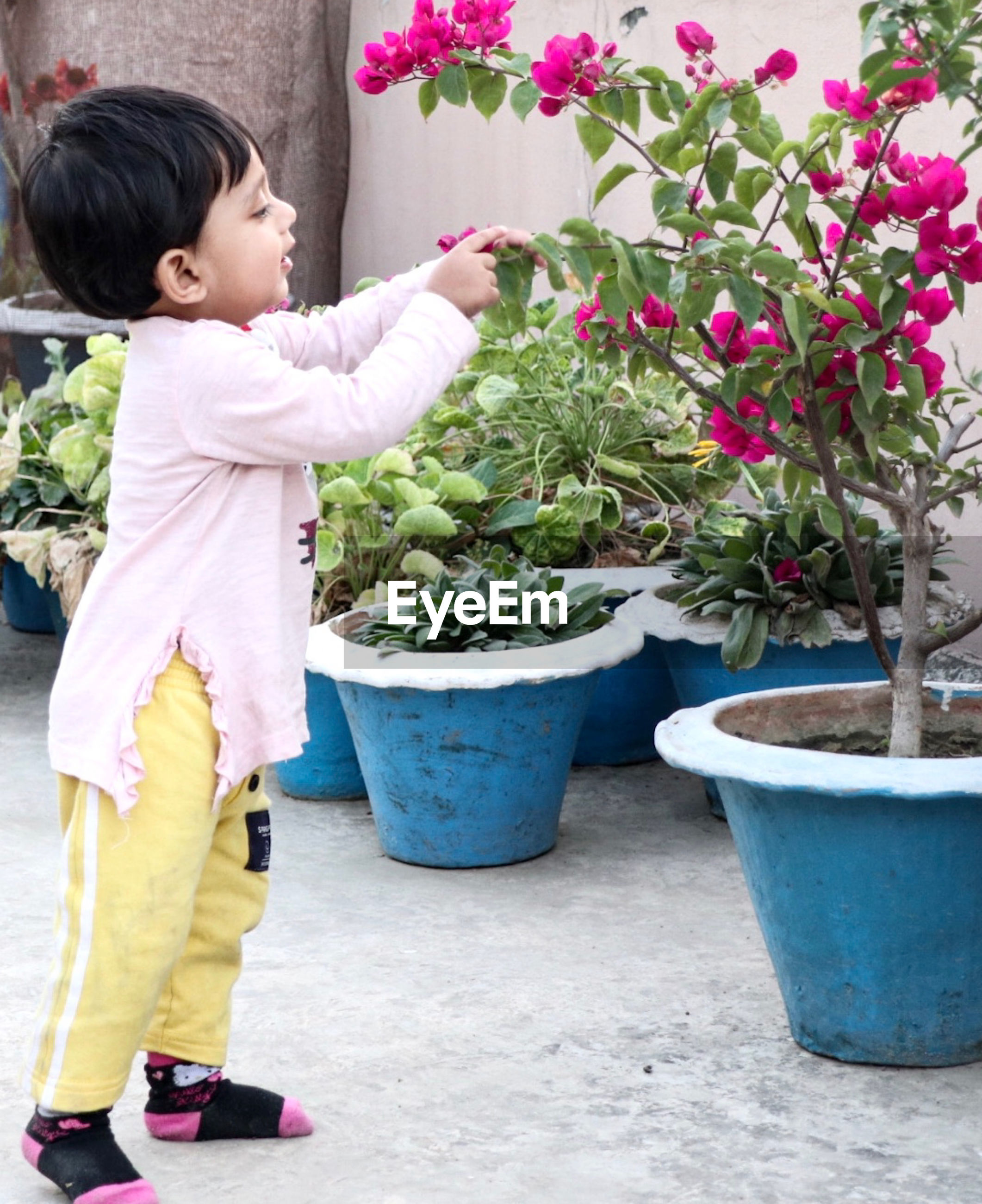 Side view of cute girl holding flower pot