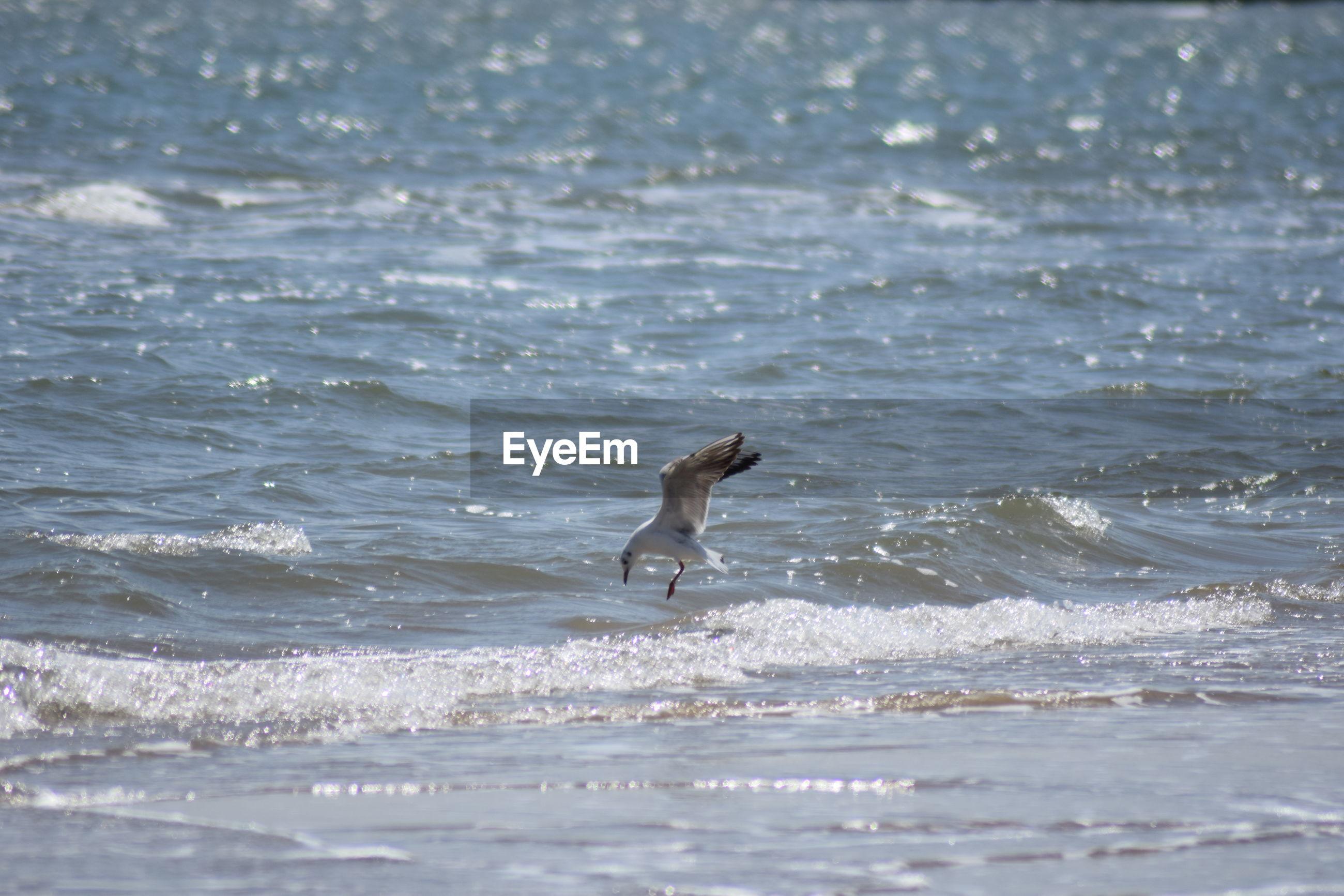 View of bird on beach