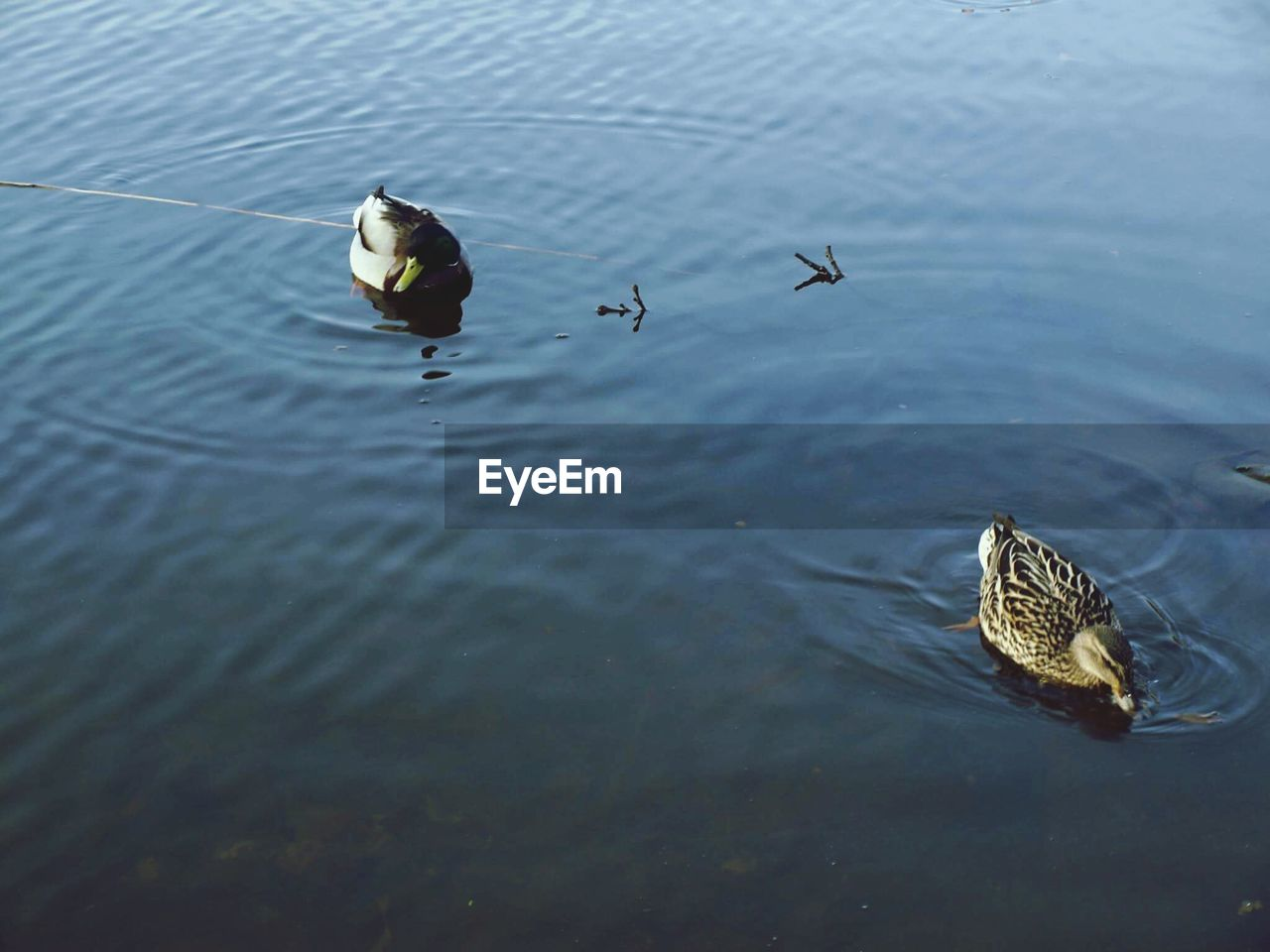animal themes, animals in the wild, bird, water, animal wildlife, waterfront, nature, swimming, outdoors, high angle view, lake, no people, day, water bird, one animal, flying