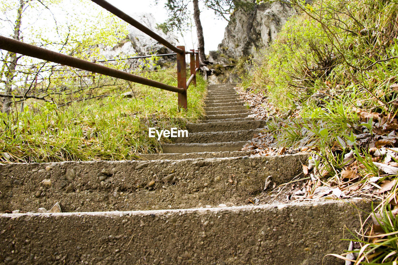 steps, steps and staircases, tree, day, the way forward, outdoors, built structure, nature, no people