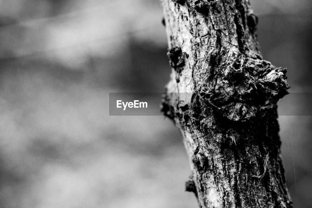 tree, tree trunk, trunk, focus on foreground, plant, close-up, textured, day, nature, rough, no people, bark, growth, outdoors, pattern, plant bark, tranquility, wood - material, forest, land, lichen