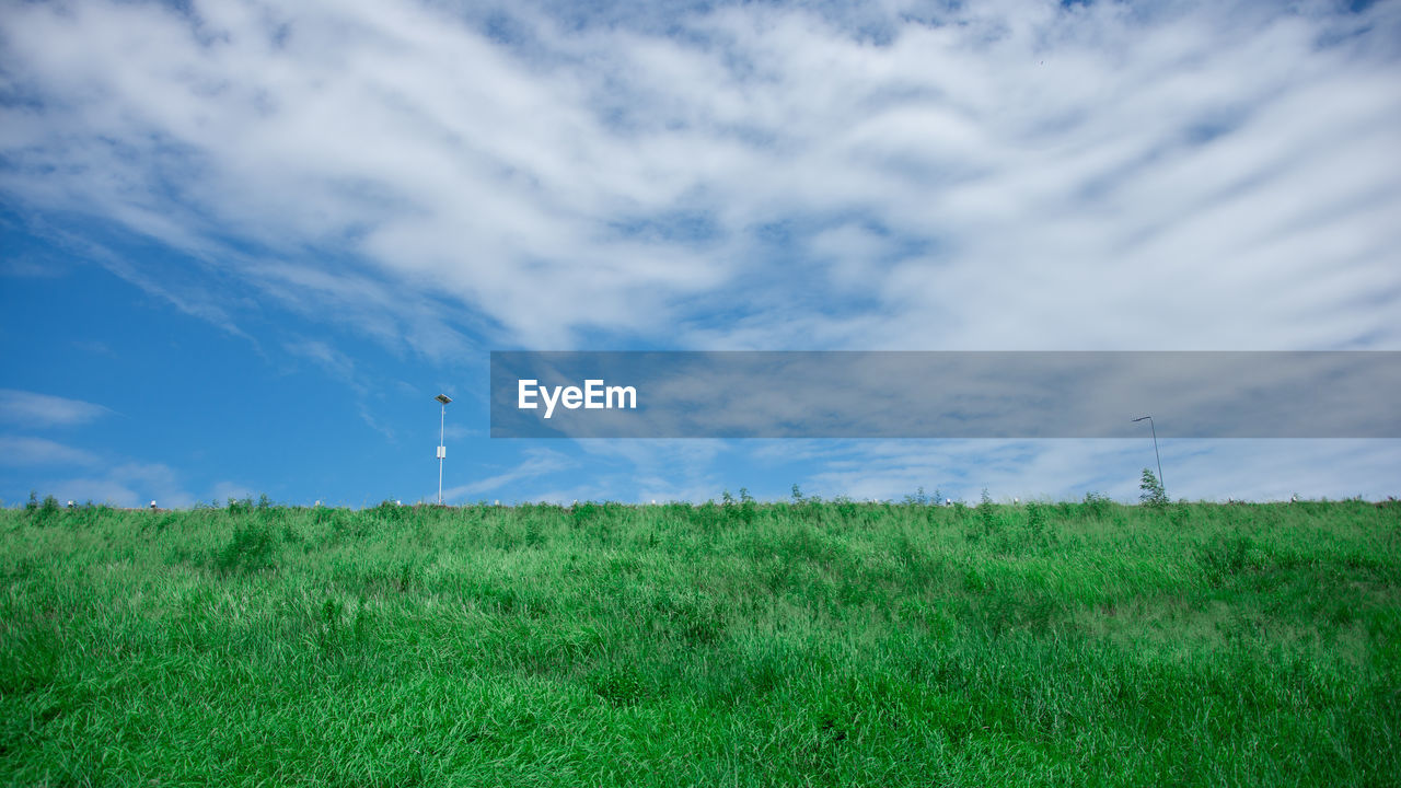 sky, grass, cloud - sky, land, field, environment, green color, landscape, plant, nature, beauty in nature, day, flying, growth, scenics - nature, tranquil scene, tranquility, freedom, outdoors, non-urban scene