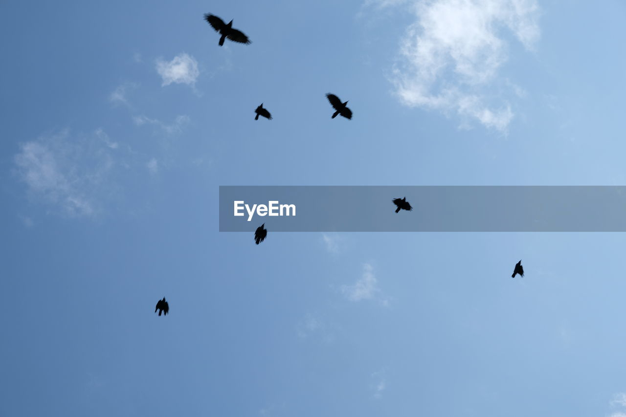 vertebrate, flying, bird, animal themes, group of animals, animal, animal wildlife, sky, animals in the wild, low angle view, mid-air, cloud - sky, no people, silhouette, spread wings, beauty in nature, nature, medium group of animals, motion, flock of birds, eagle