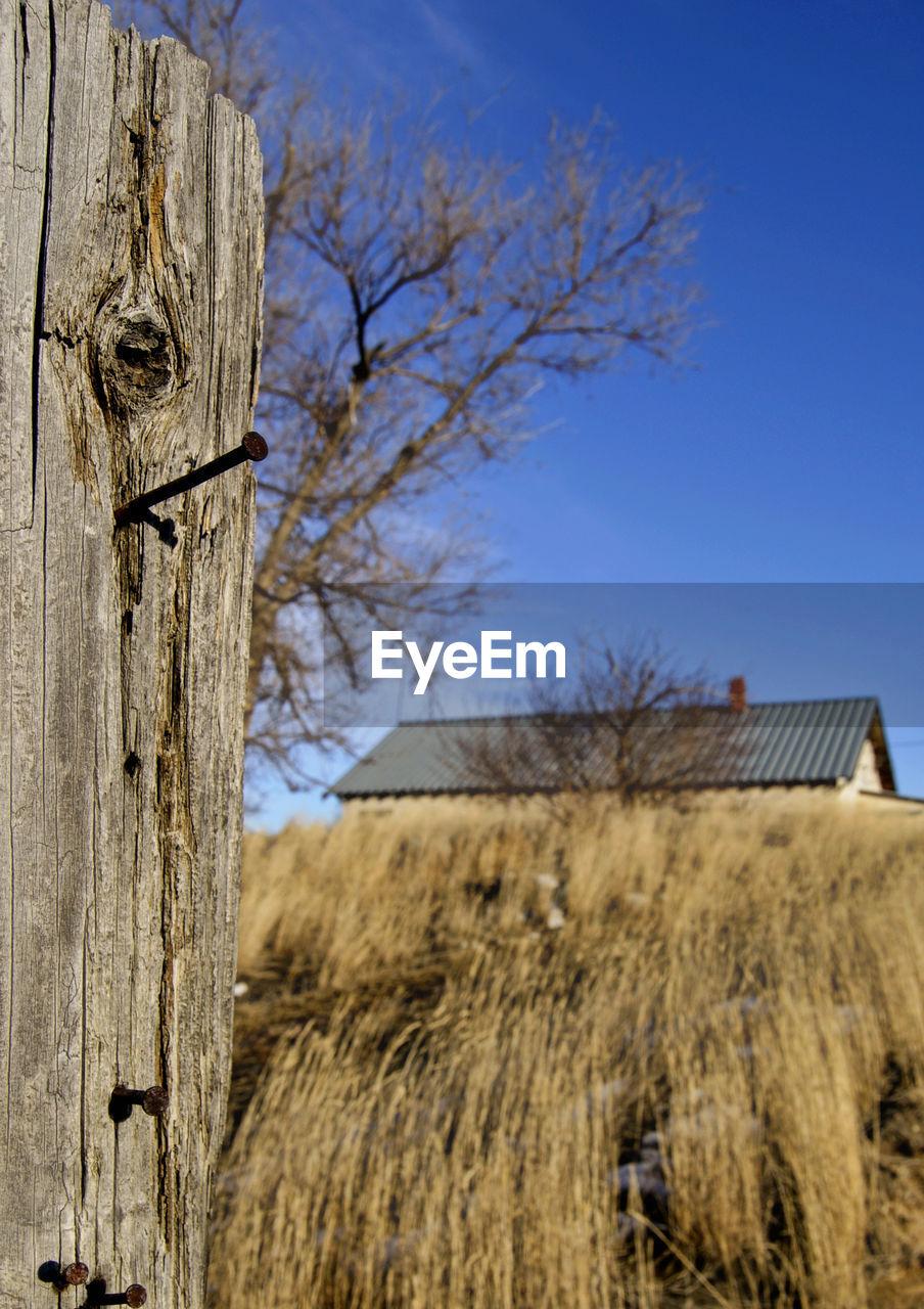 bare tree, wood - material, built structure, wooden post, day, outdoors, architecture, no people, building exterior, clear sky, field, rural scene, barn, nature, sky, tree, farmhouse