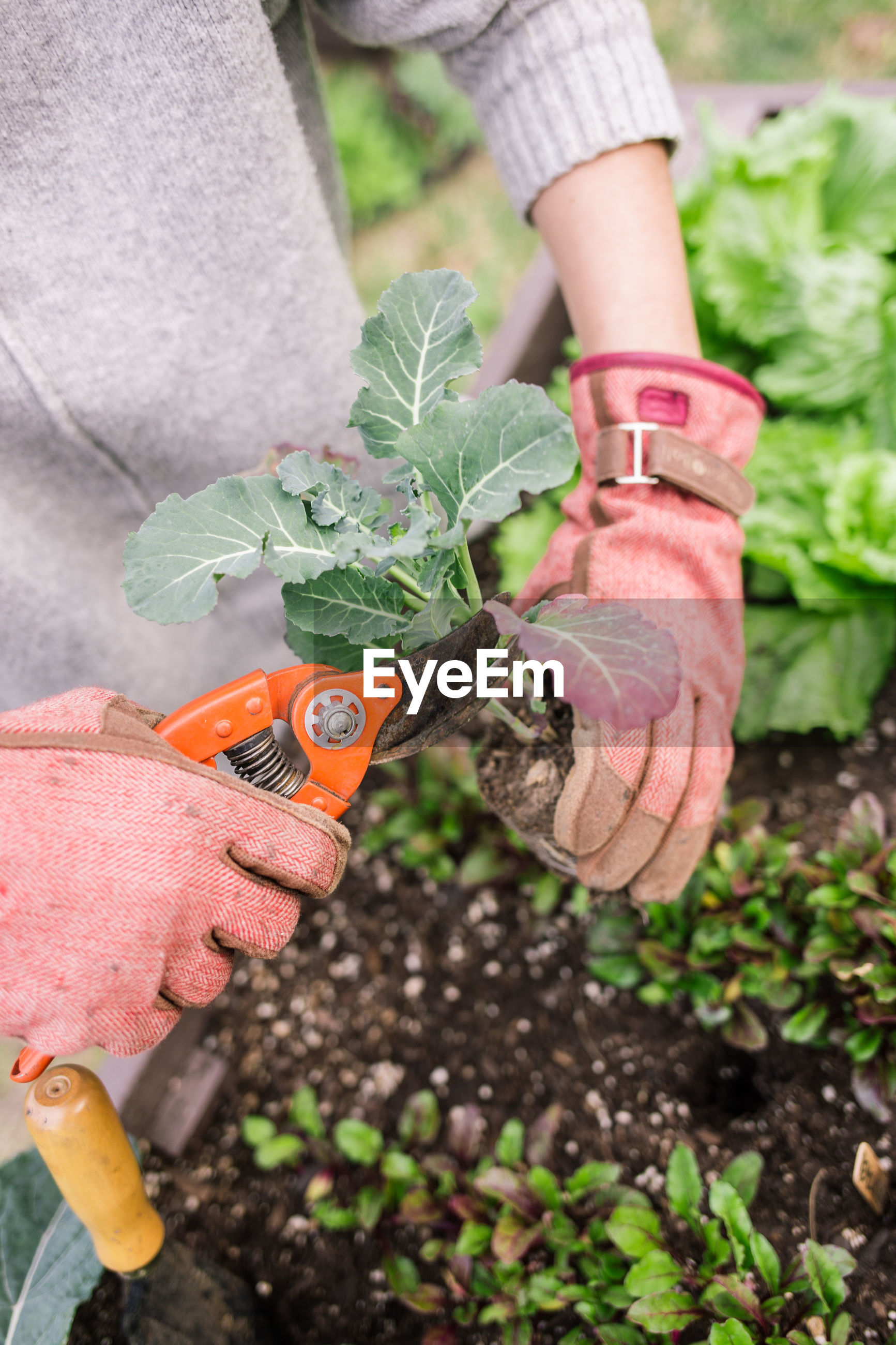 MIDSECTION OF PERSON HOLDING PLANTS IN GARDEN