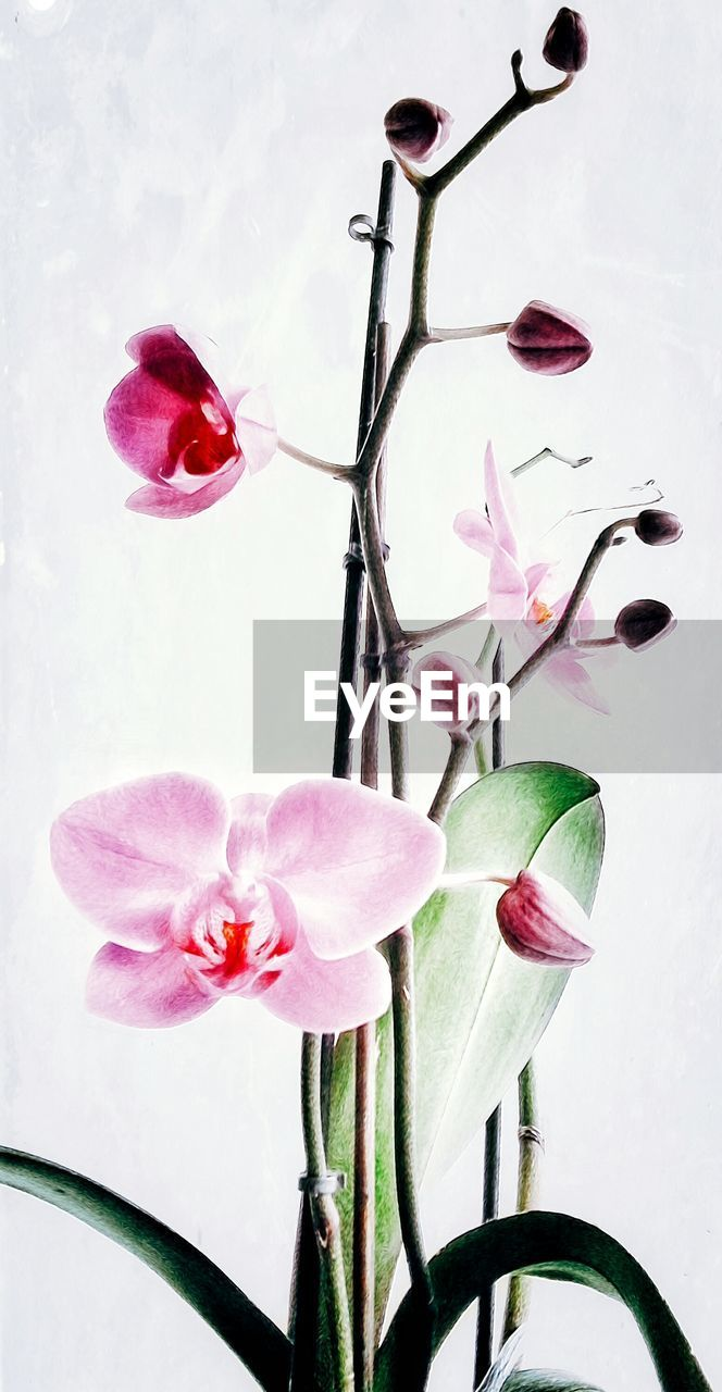 flower, petal, growth, no people, freshness, nature, fragility, pink color, beauty in nature, close-up, flower head, blooming, day
