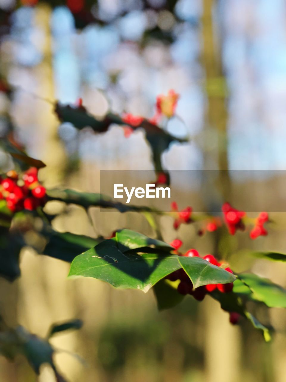 plant, plant part, leaf, growth, beauty in nature, focus on foreground, freshness, nature, close-up, day, flower, no people, flowering plant, selective focus, green color, fragility, vulnerability, red, outdoors, tree, flower head