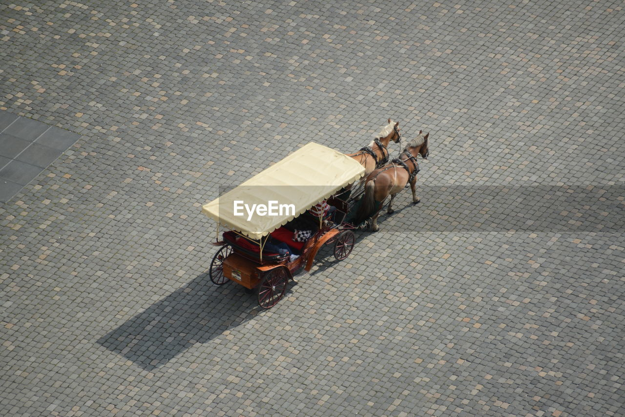 HIGH ANGLE VIEW OF HORSE ON STREET