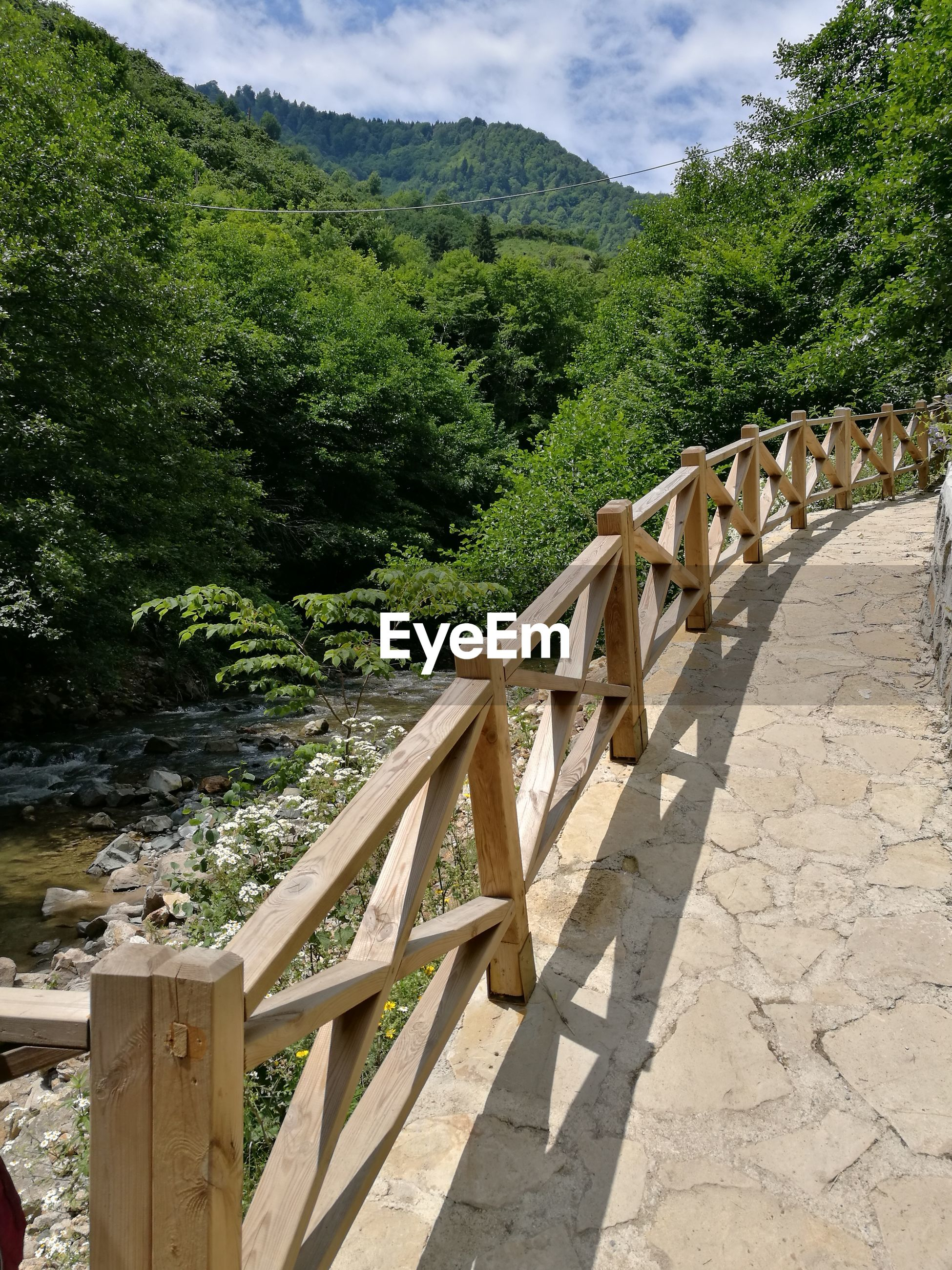 tree, mountain, railing, day, no people, wood - material, nature, outdoors, growth, bridge - man made structure, sky, scenics, beauty in nature