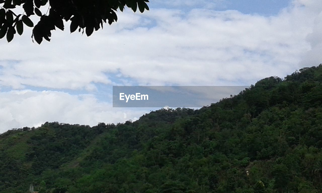 tree, nature, sky, beauty in nature, day, cloud - sky, no people, scenics, outdoors, tranquility, growth, mountain