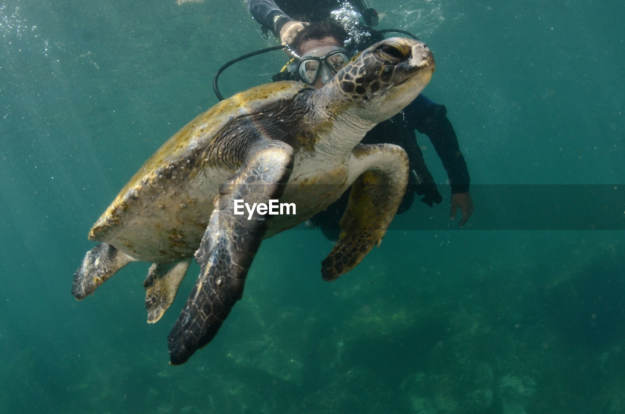 Person scuba diving by turtle in sea