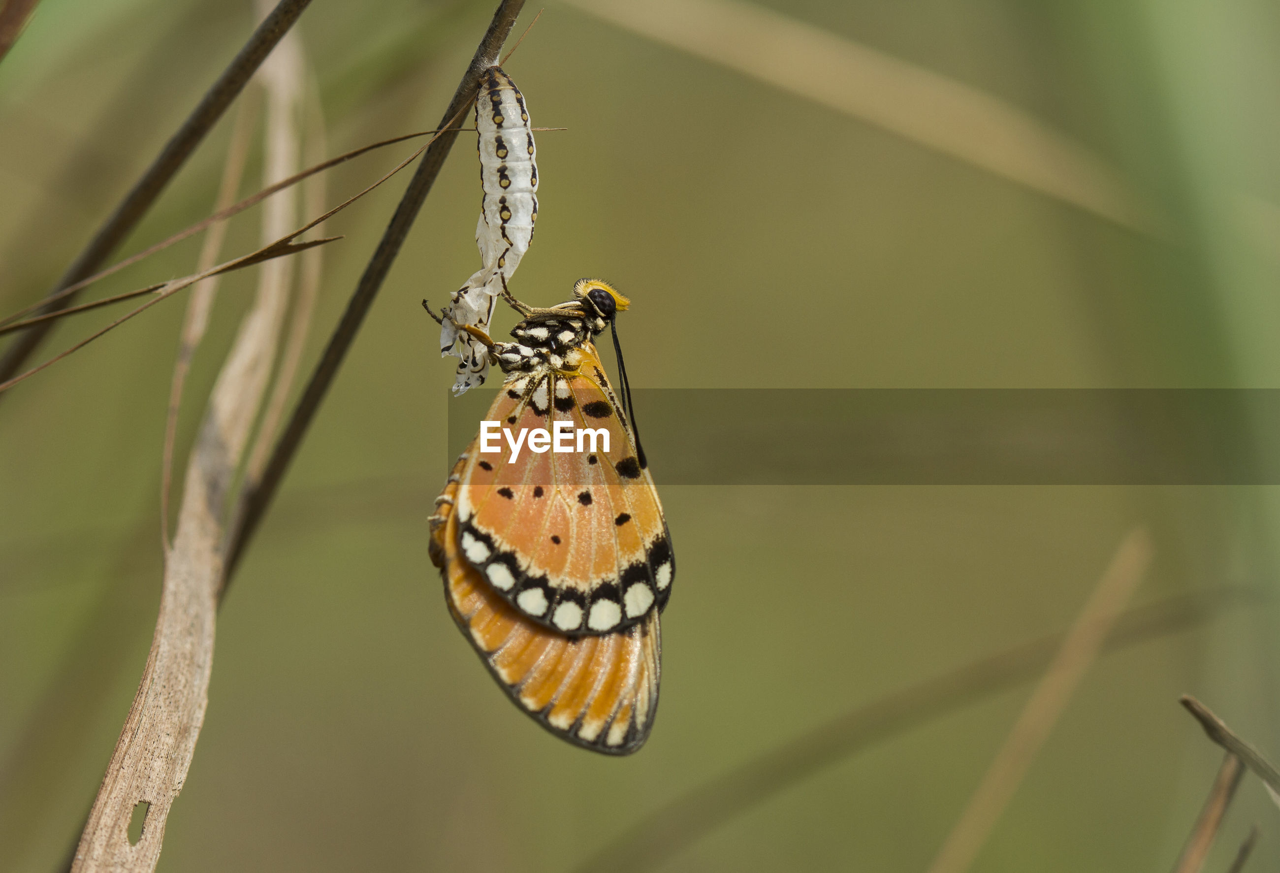 Close-up of butterfly on plant stem