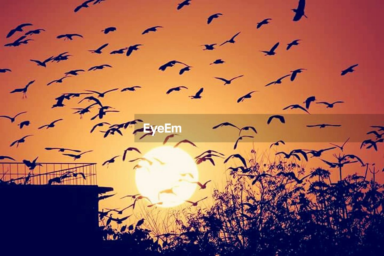 bird, flying, flock of birds, large group of animals, animals in the wild, animal themes, animal wildlife, sunset, silhouette, nature, sun, no people, mid-air, beauty in nature, outdoors, sky, spread wings, day