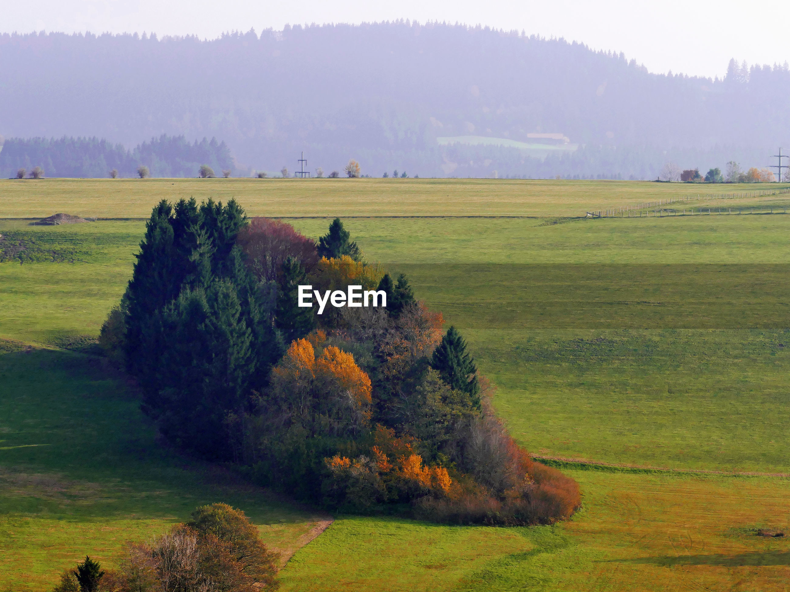 Scenic view of meadow and trees