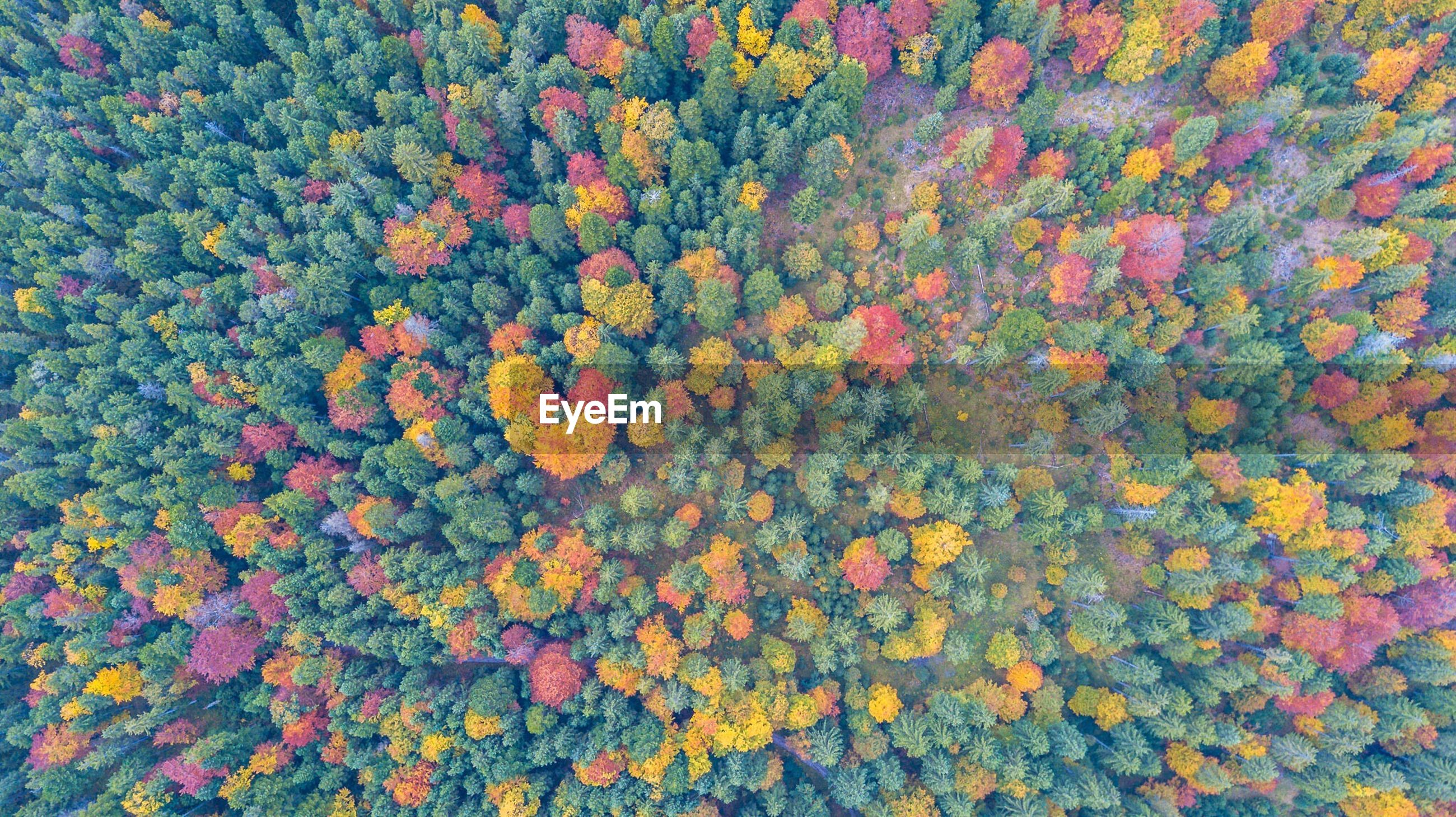 Full frame shot of trees in forest during autumn