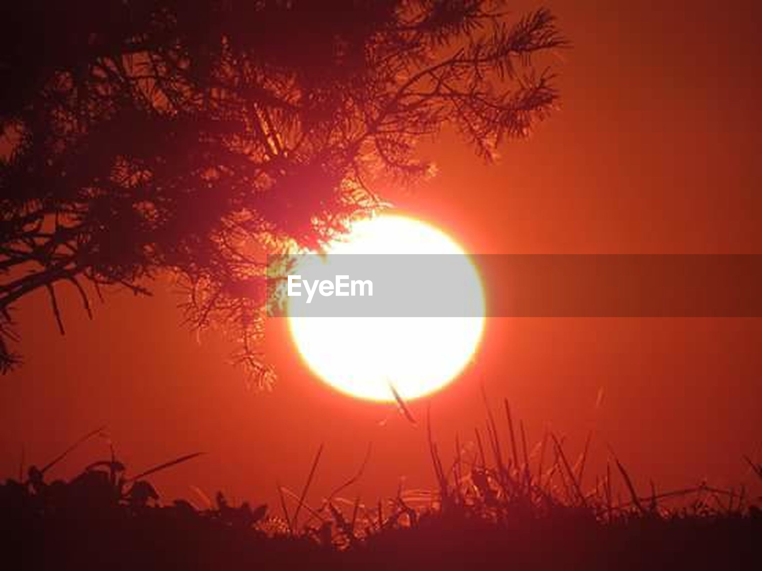 sun, sunset, circle, sunlight, silhouette, sky, tranquil scene, beauty, summer, beauty in nature, field, scenics, dusk, outdoors, no people, tree, nature, moon, brightly lit, illuminated, low angle view, grass, day