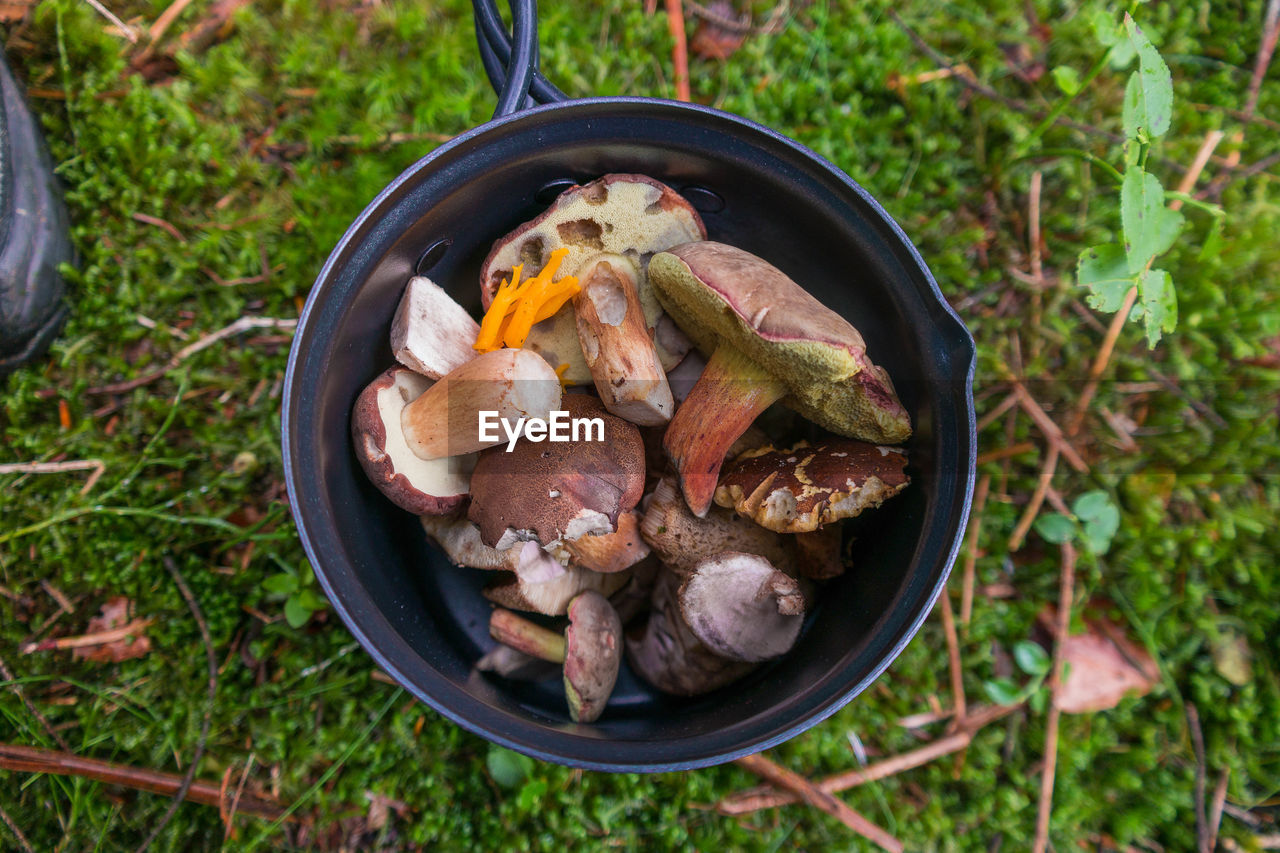 Directly Above Shot Of Mushrooms In Container On Field