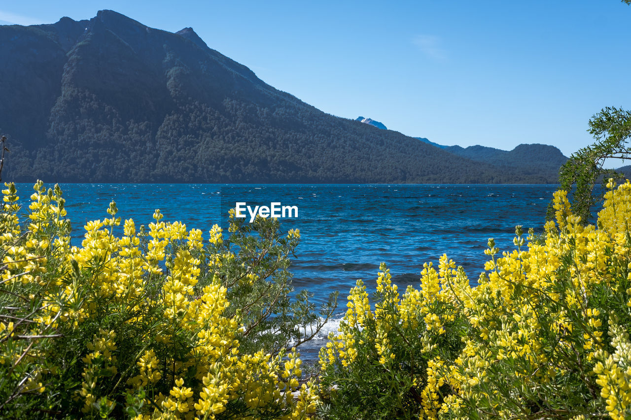 beauty in nature, mountain, sky, scenics - nature, plant, tranquil scene, tranquility, water, nature, growth, yellow, no people, non-urban scene, day, sea, flower, land, idyllic, mountain range, outdoors