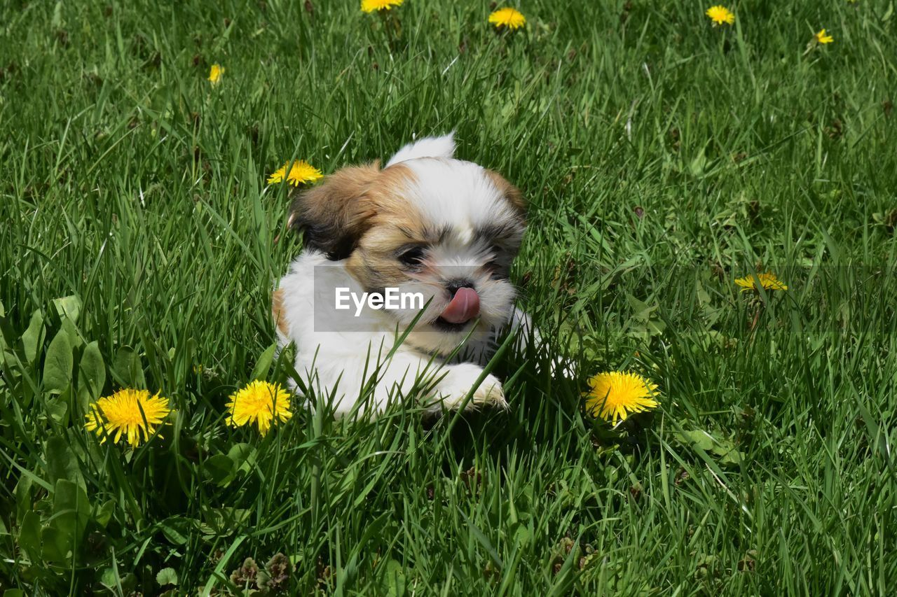 PORTRAIT OF A DOG ON GRASS