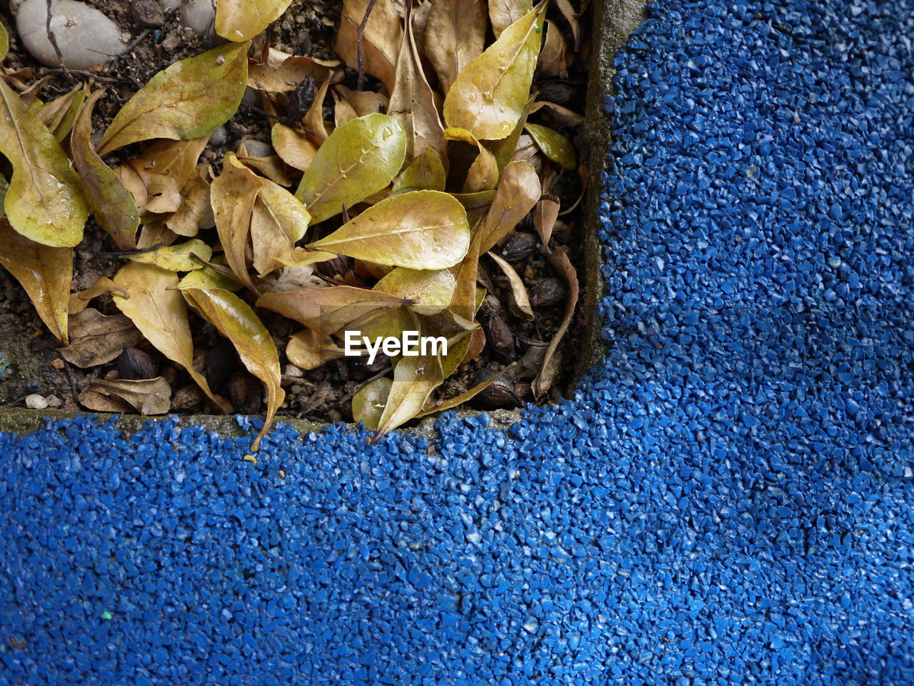 blue, high angle view, no people, food and drink, food, close-up, large group of objects, still life, plant part, day, leaf, freshness, indoors, directly above, textile, healthy eating, textured, abundance, nature, backgrounds, dried