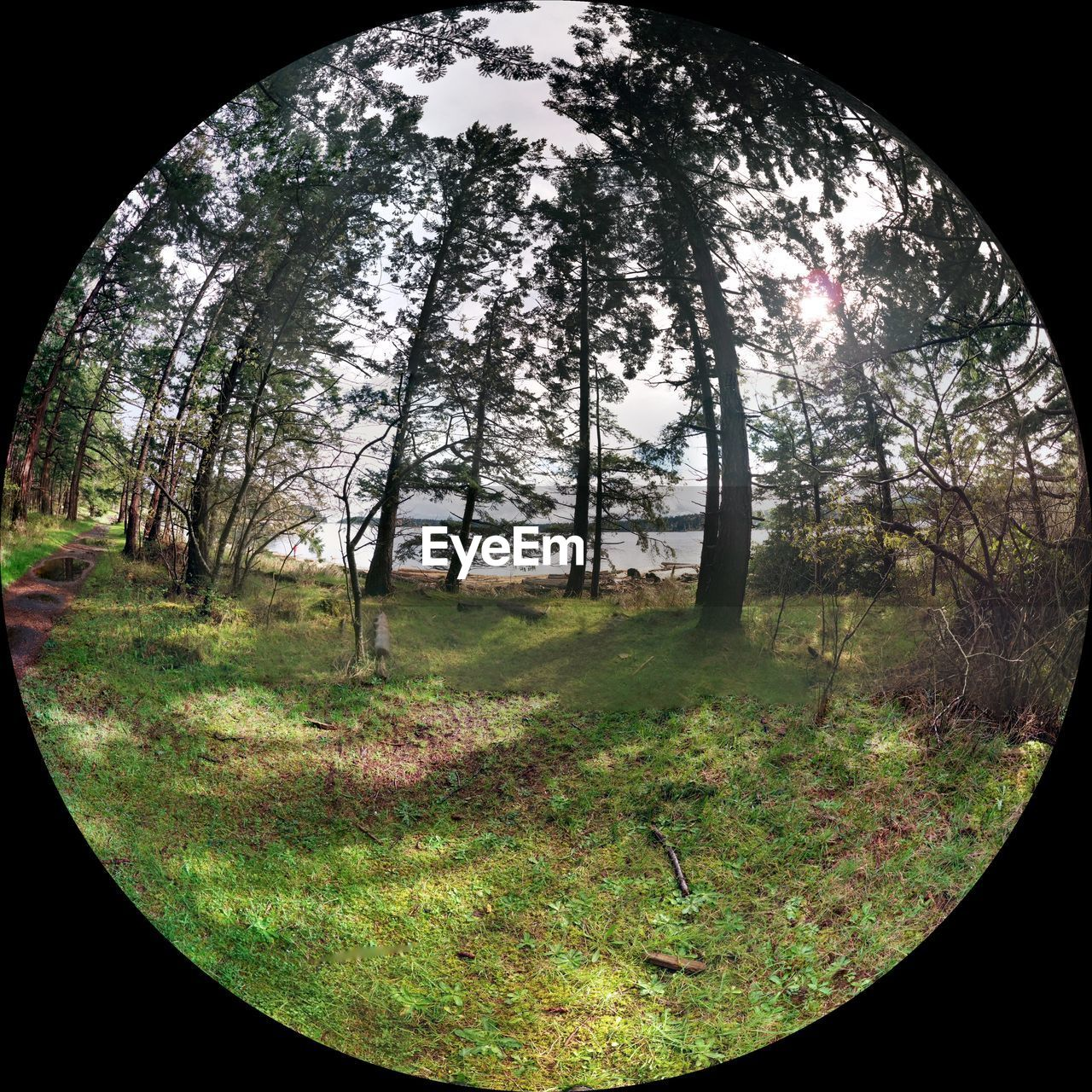 tree, nature, day, no people, tranquility, outdoors, autumn, grass, fish-eye lens, scenics, beauty in nature, sky